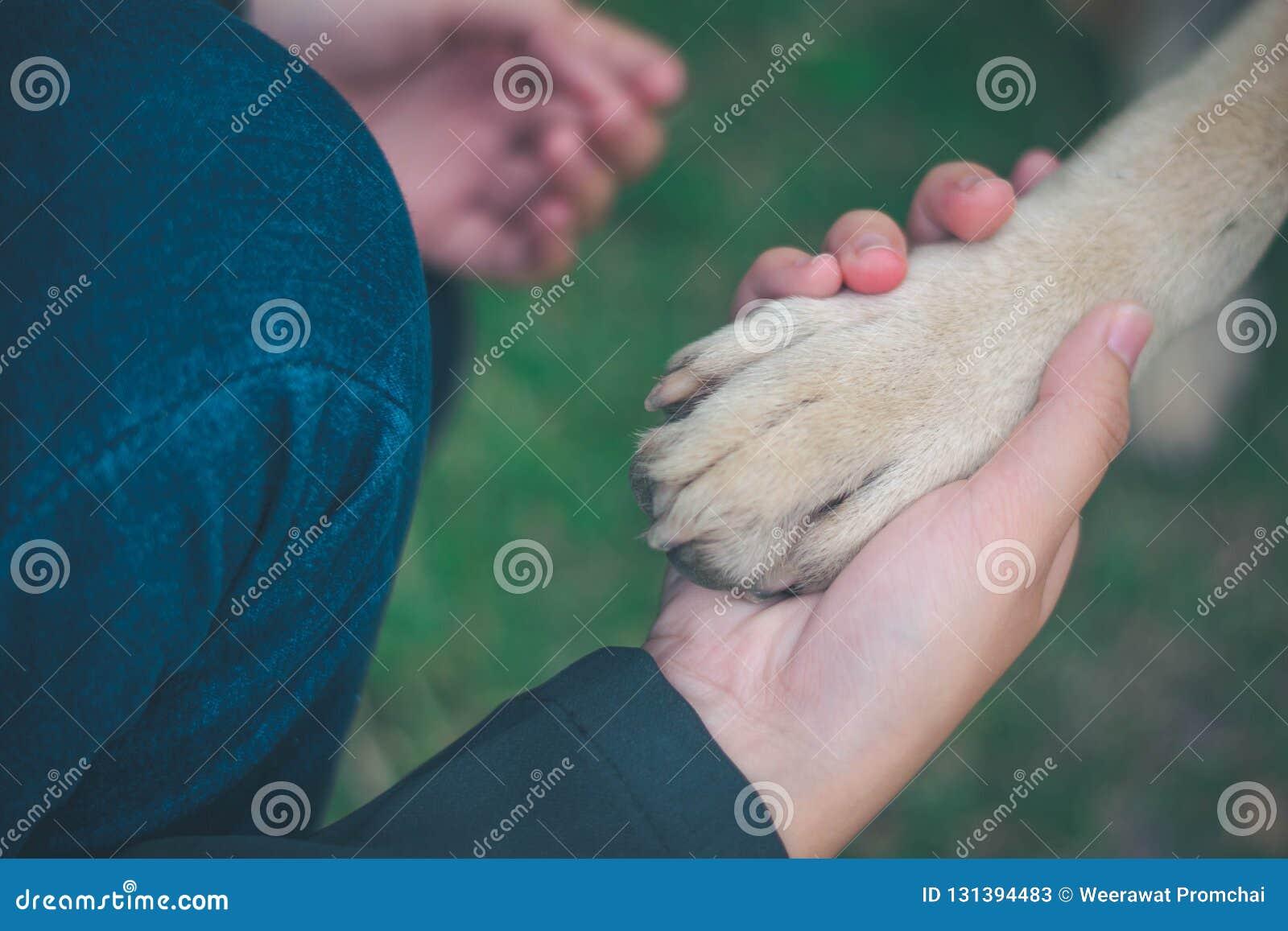 Σχέση μεταξύ του ανθρώπου και του σκυλιού