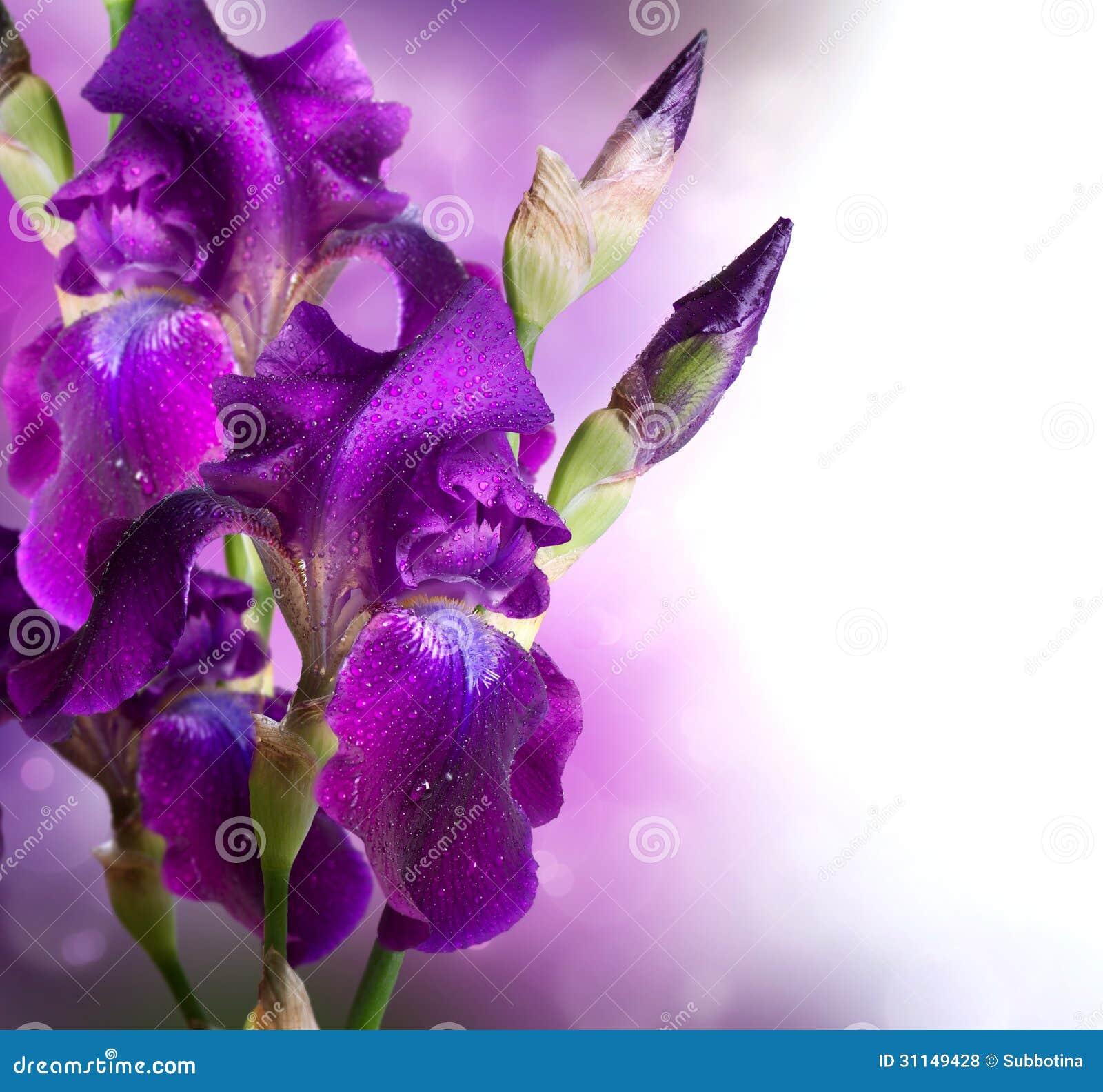 Σχέδιο τέχνης λουλουδιών της Iris