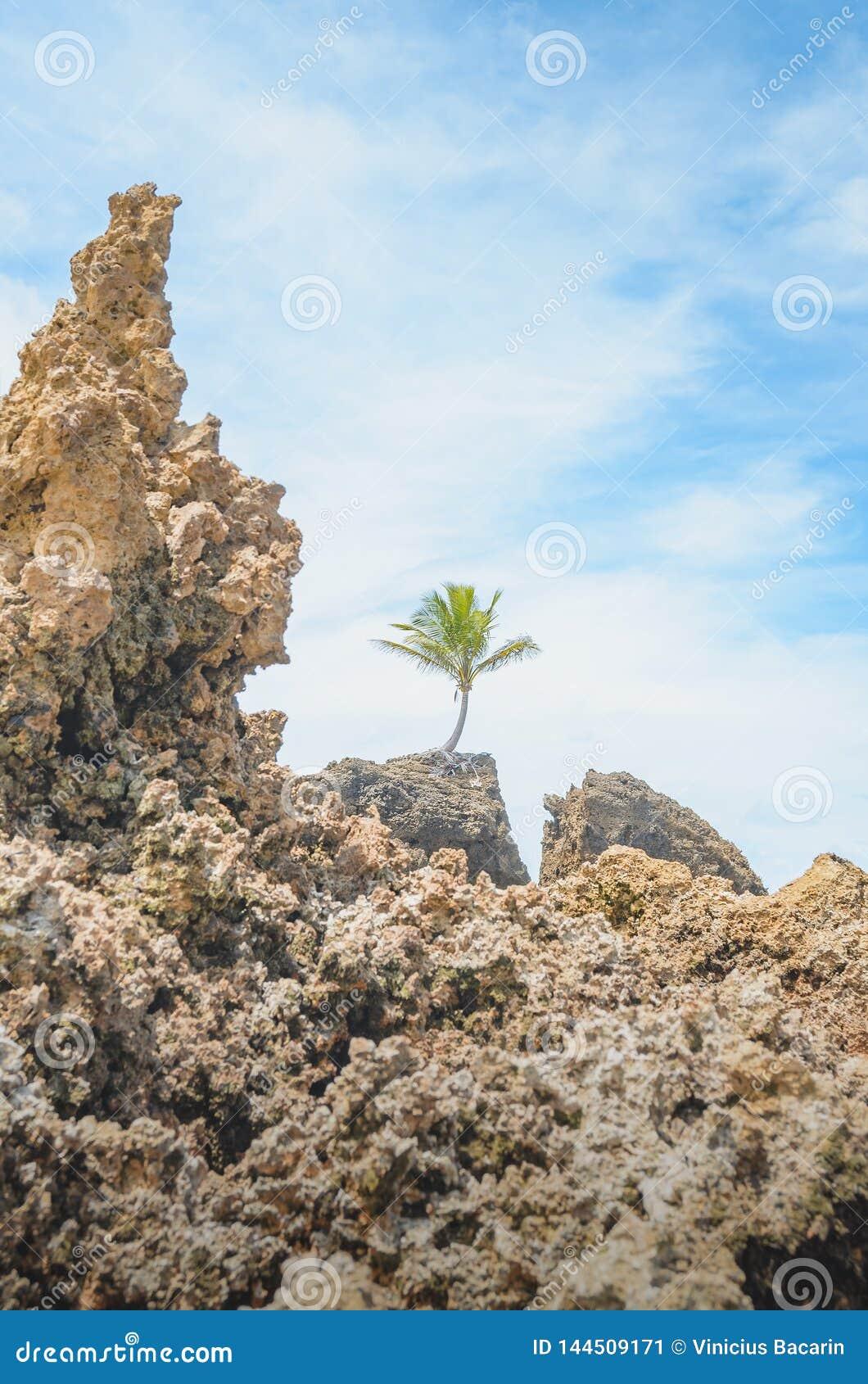 Σχηματισμοί βράχου της παραλίας Tambaba