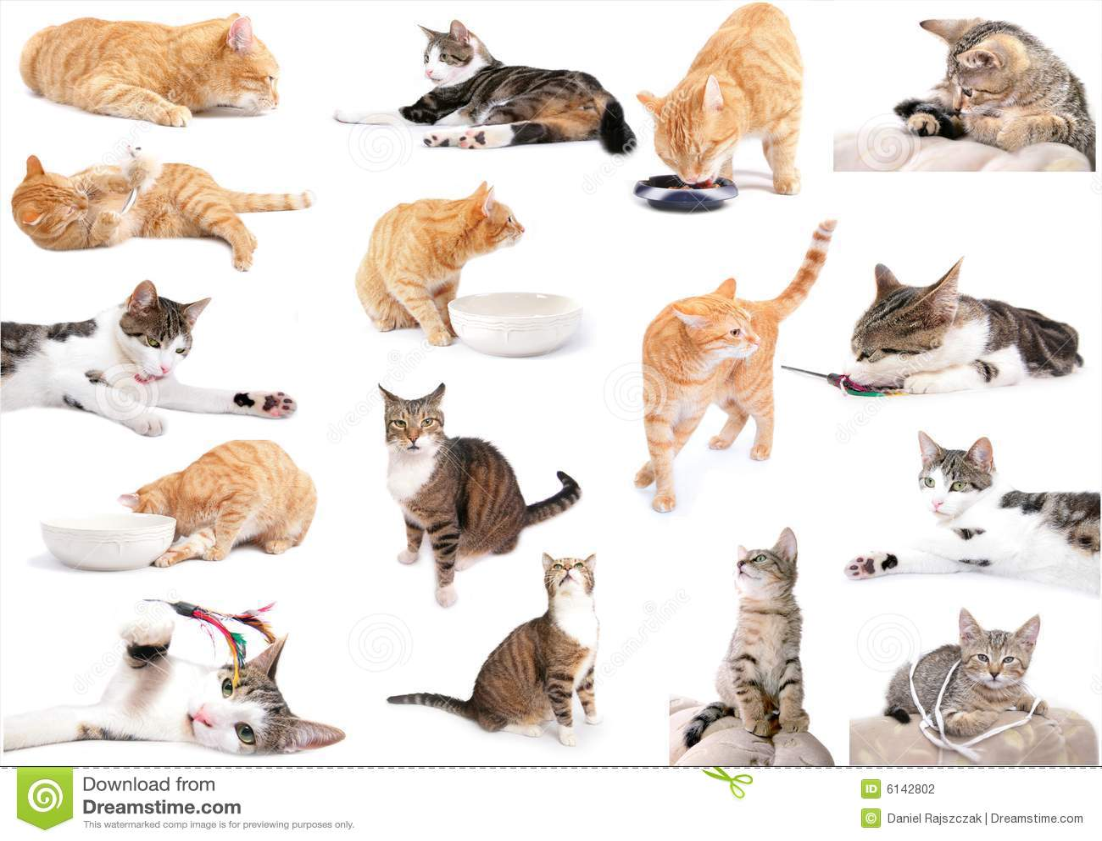 σύνολο γατών