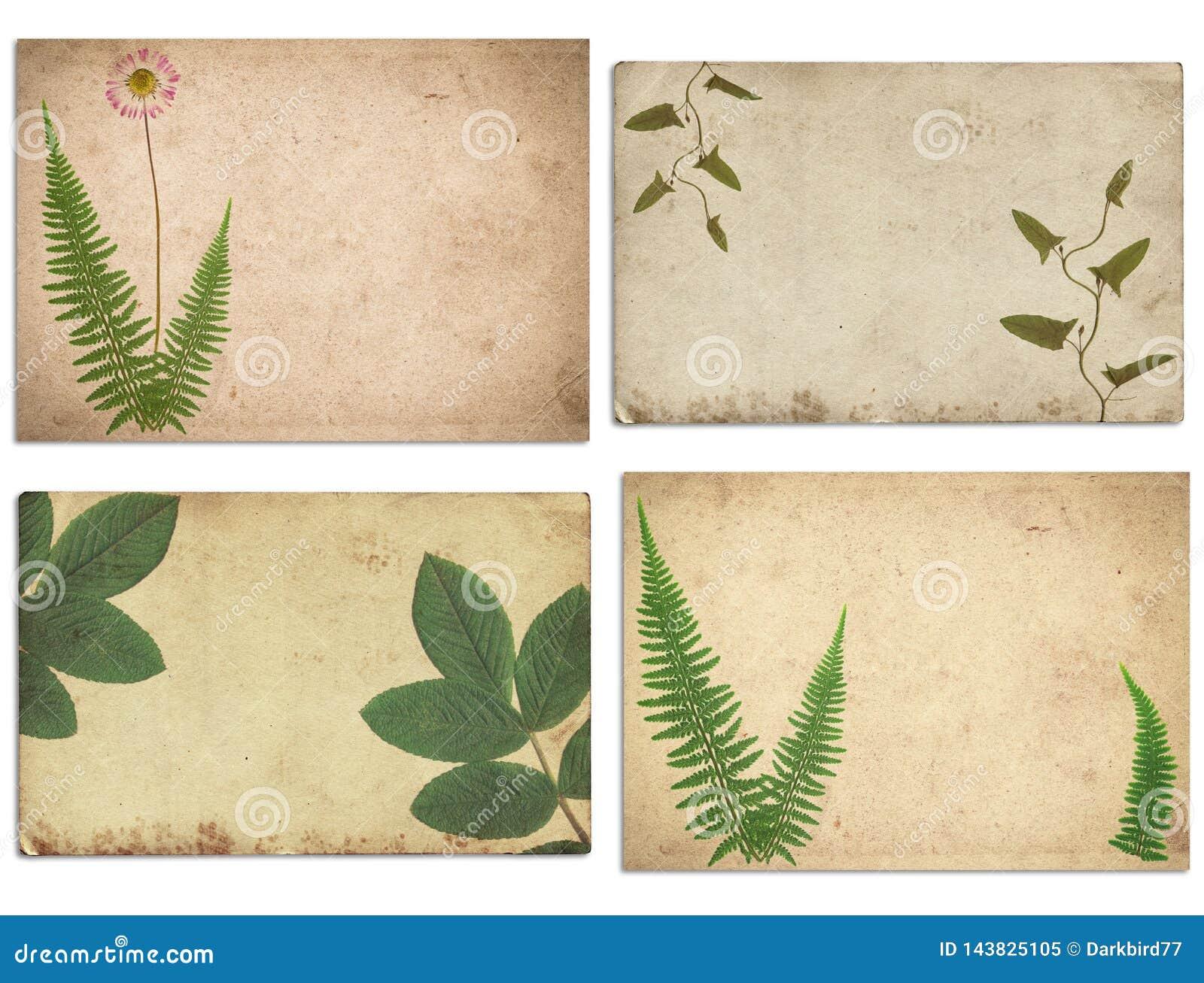 Σύνολο διάφορης παλαιάς εκλεκτής ποιότητας σύστασης εγγράφου τις ξηρά εγκαταστάσεις και το λουλούδι που απομονώνονται με