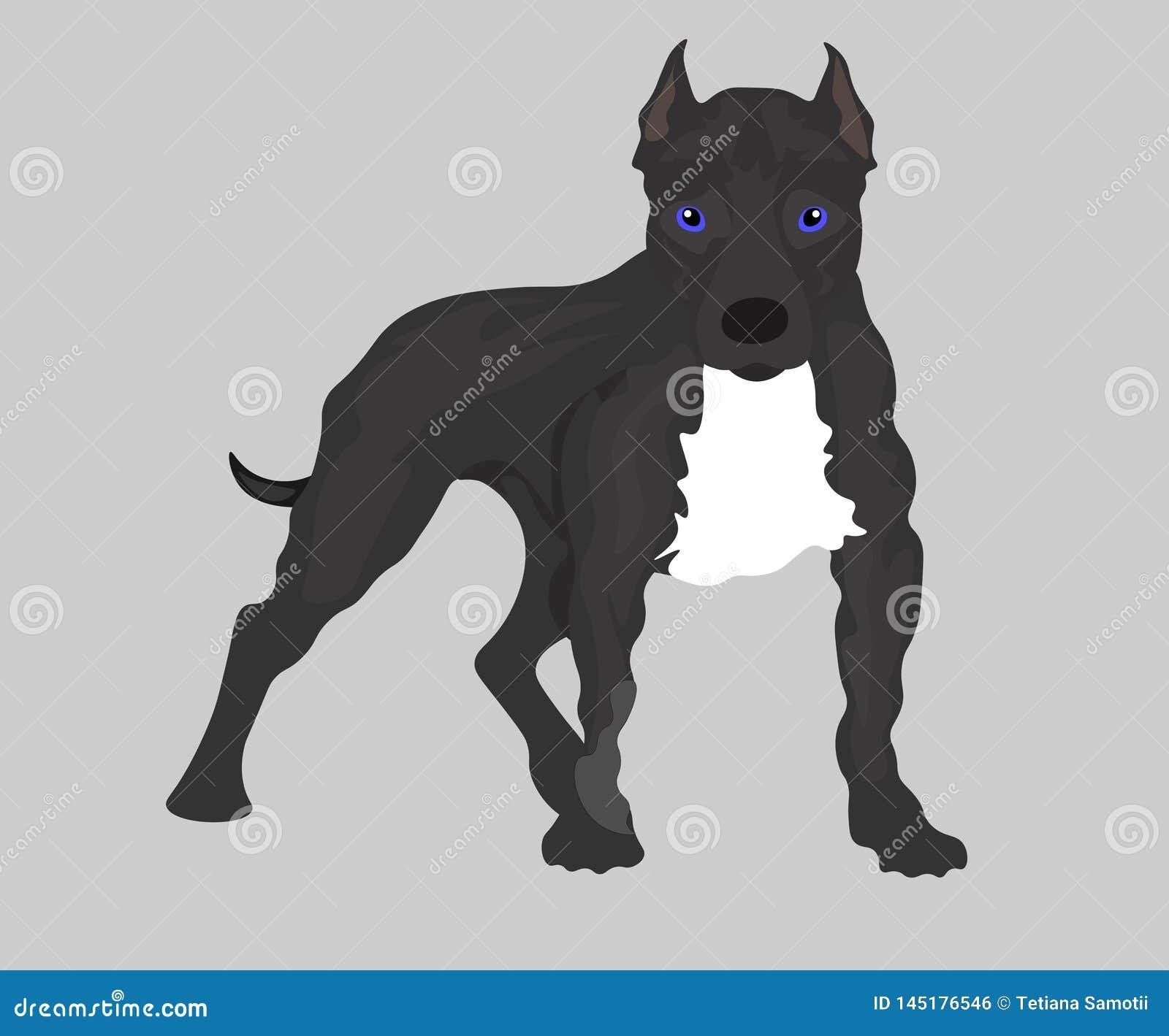 Σύνολο εικόνας Ιστού σκυλιών: Αμερικανικό τεριέ πίτμπουλ r