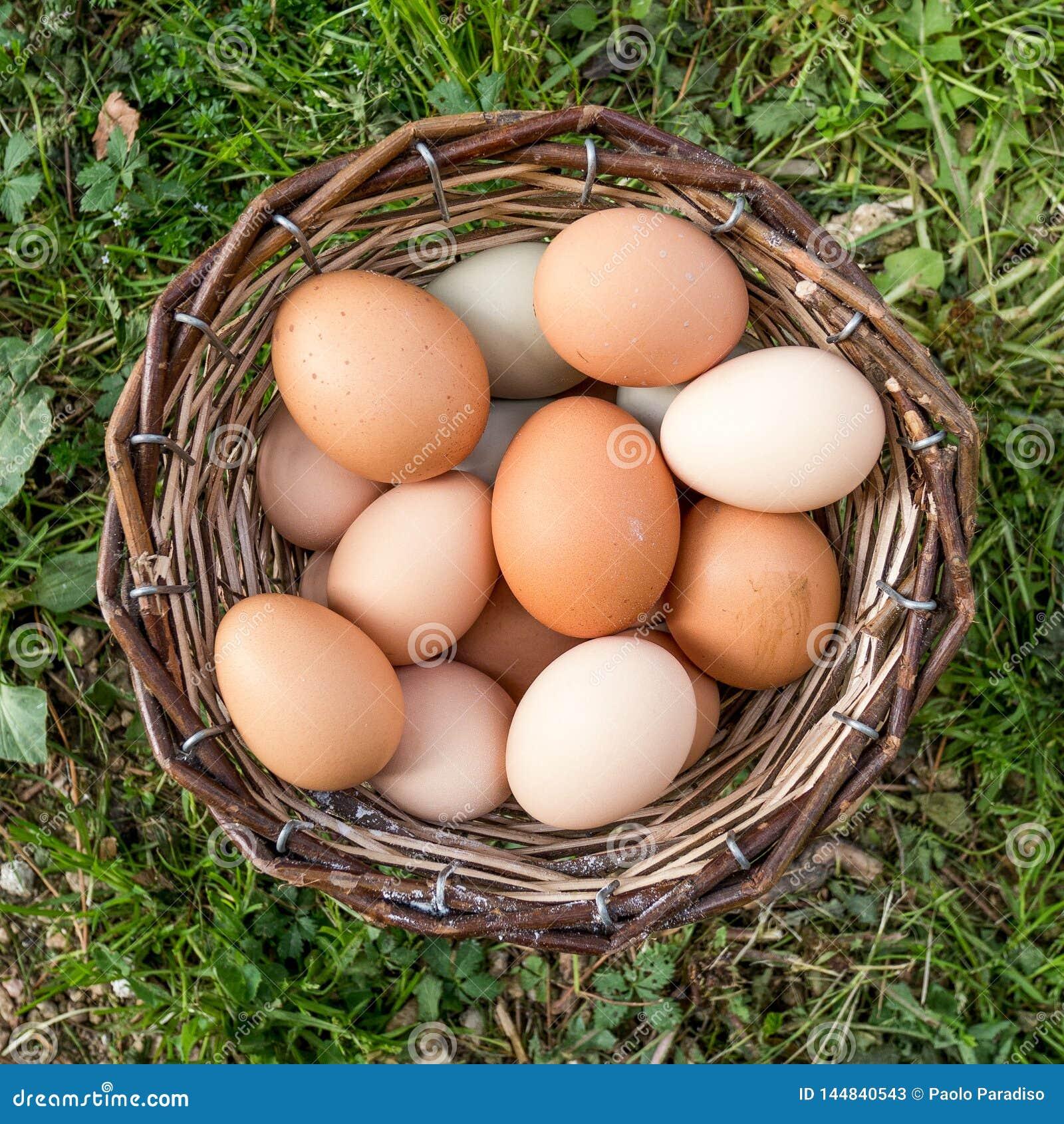Σύνολο καλαθιών των αυγών στη χλόη r
