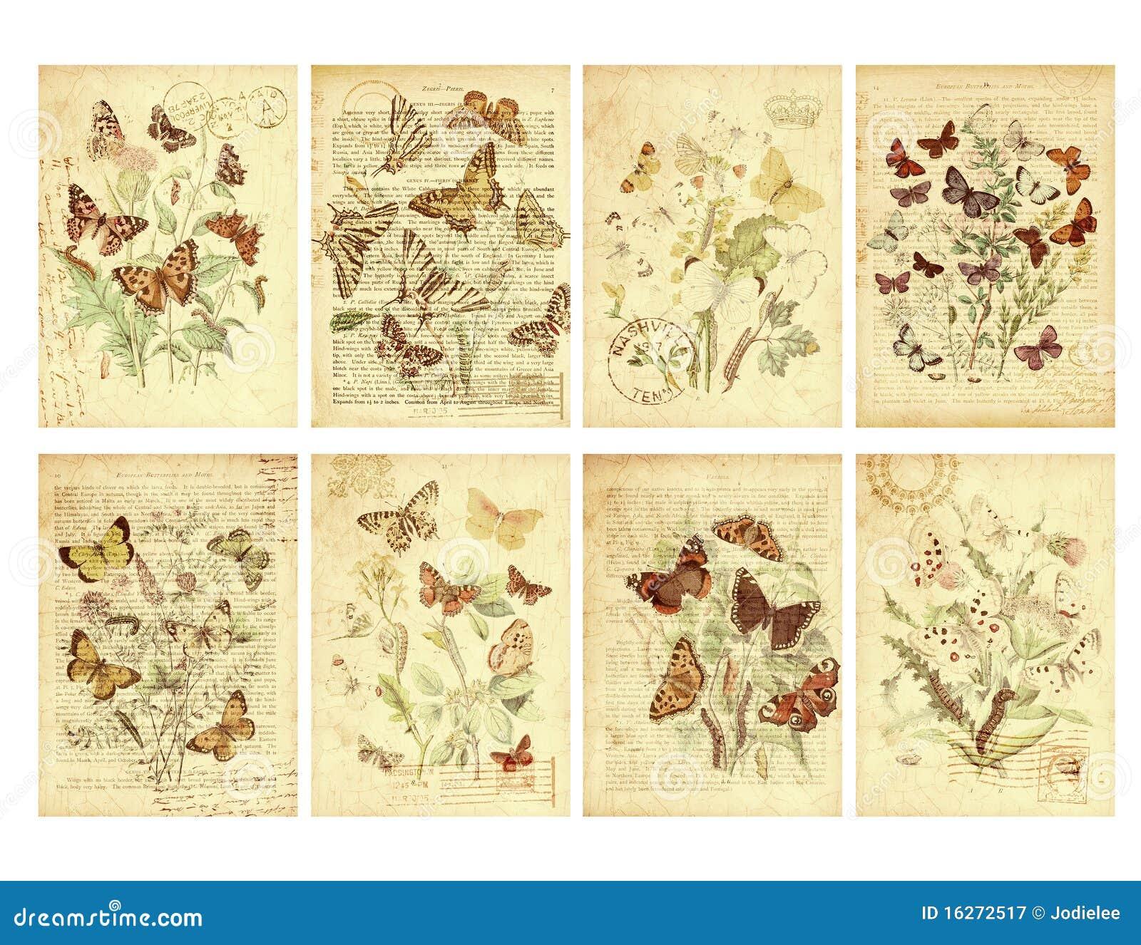 Σύνολο οκτώ εκλεκτής ποιότητας ετικεττών πεταλούδων ύφους
