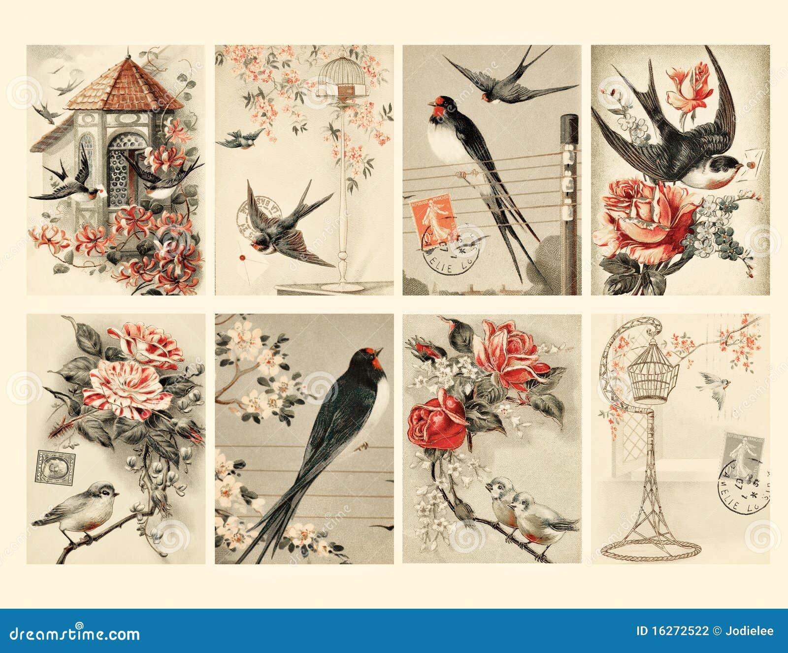 Σύνολο οκτώ εκλεκτής ποιότητας ετικεττών πουλιών ύφους