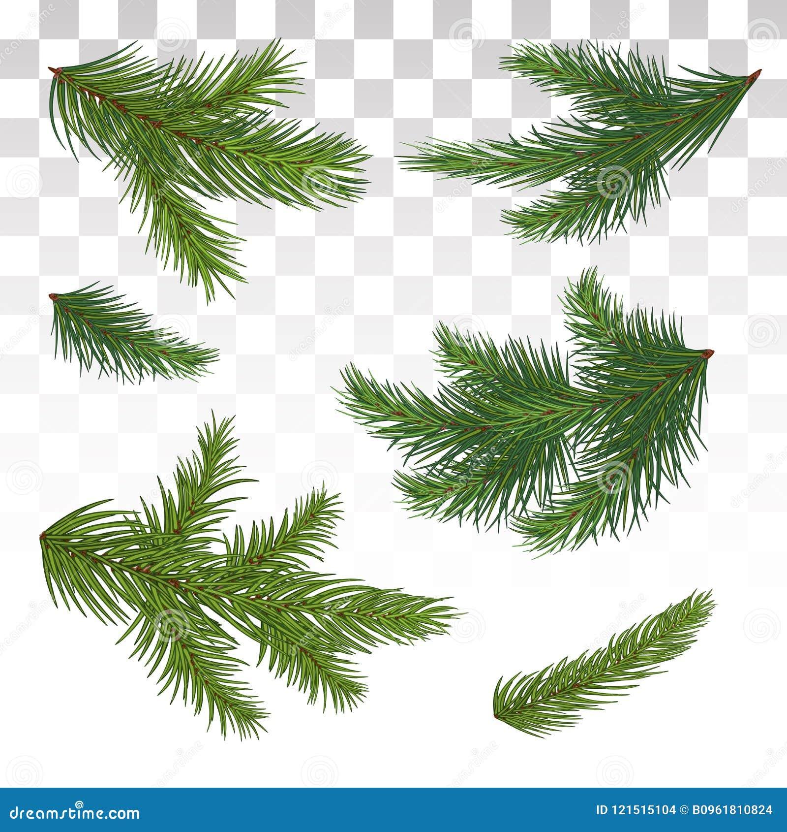 Σύνολο πράσινων κλάδων πεύκων απομονωμένος Χριστούγεννα ντεκόρ Το Chri