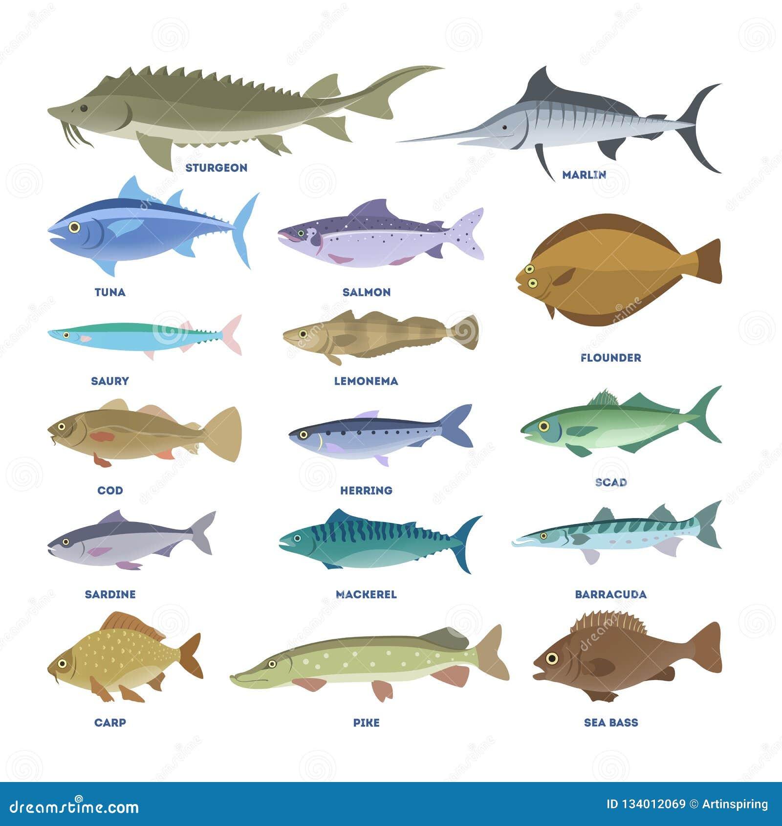 Σύνολο ψαριών Συλλογή της υδρόβιας πανίδας