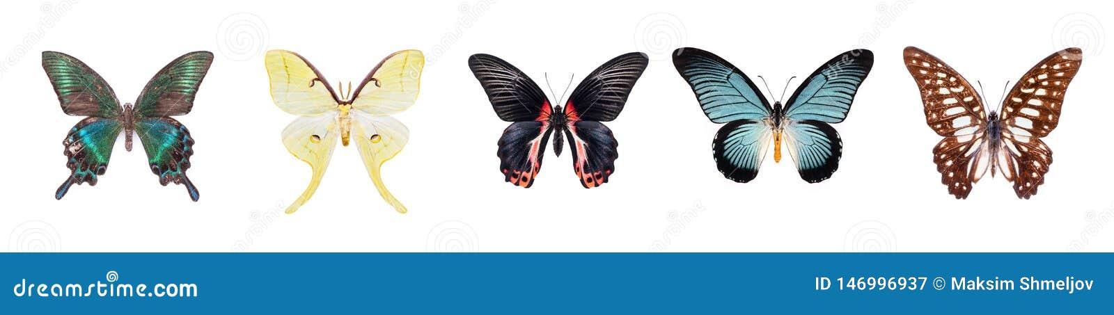 Σύνολο όμορφων και ζωηρόχρωμων πεταλούδων που απομονώνονται στο λευκό