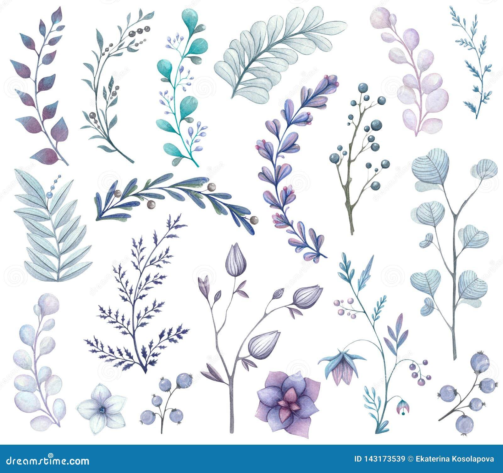 Σύνολο Watercolor κλάδων και φύλλων στους μπλε τόνους