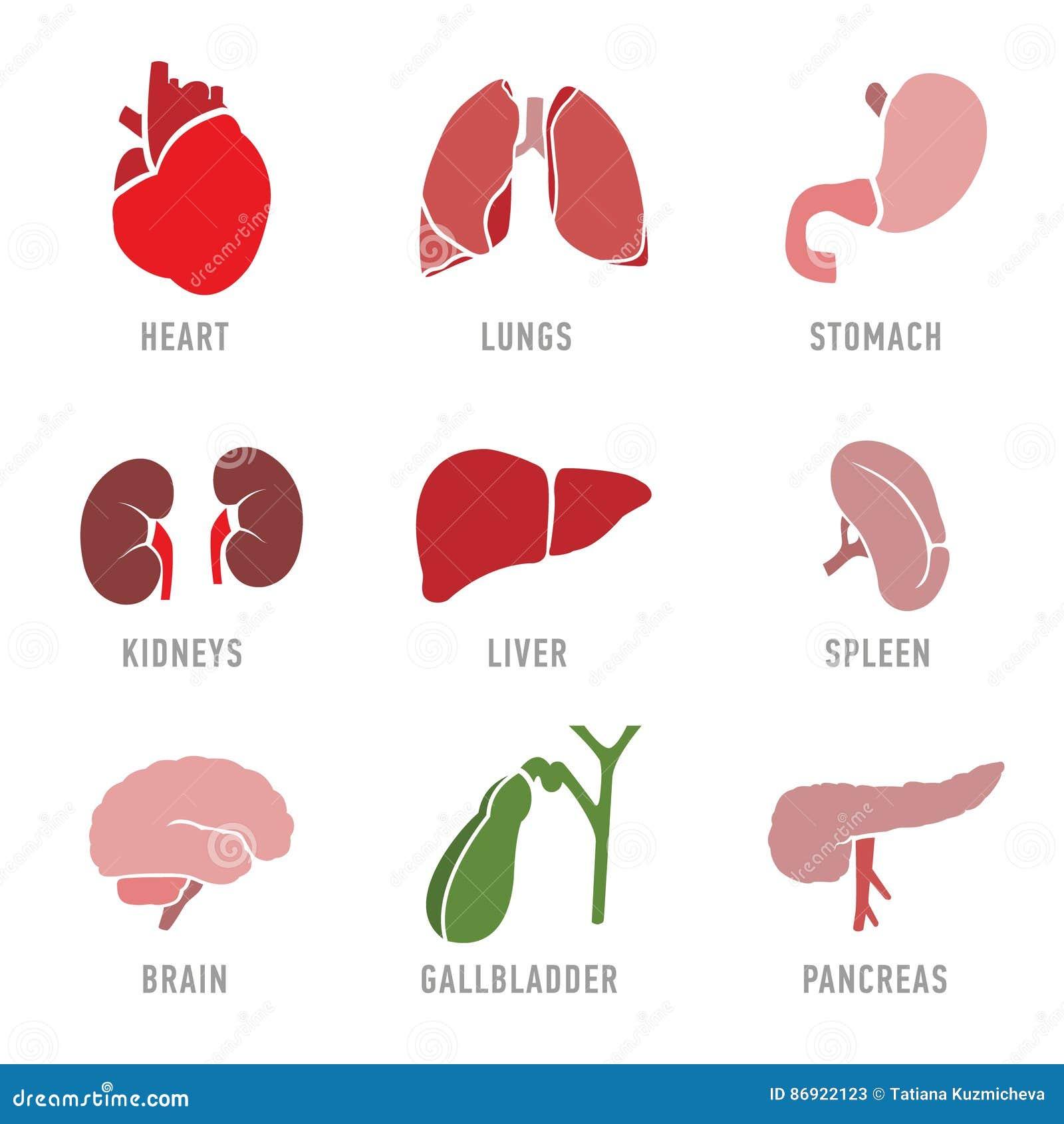 Σύνολο με τα εικονίδια των ανθρώπινων οργάνων διάνυσμα