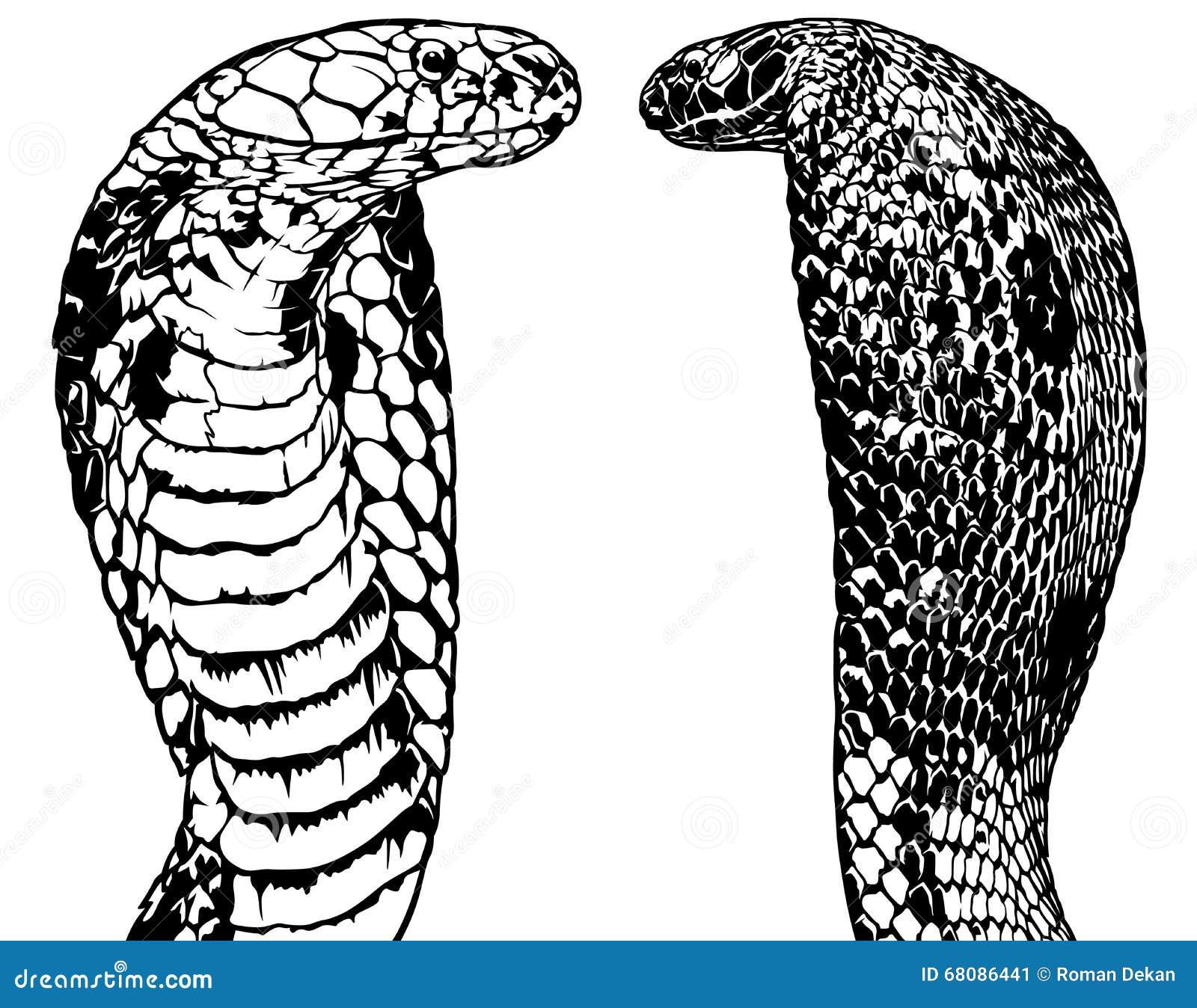 Σύνολο Cobra βασιλιάδων