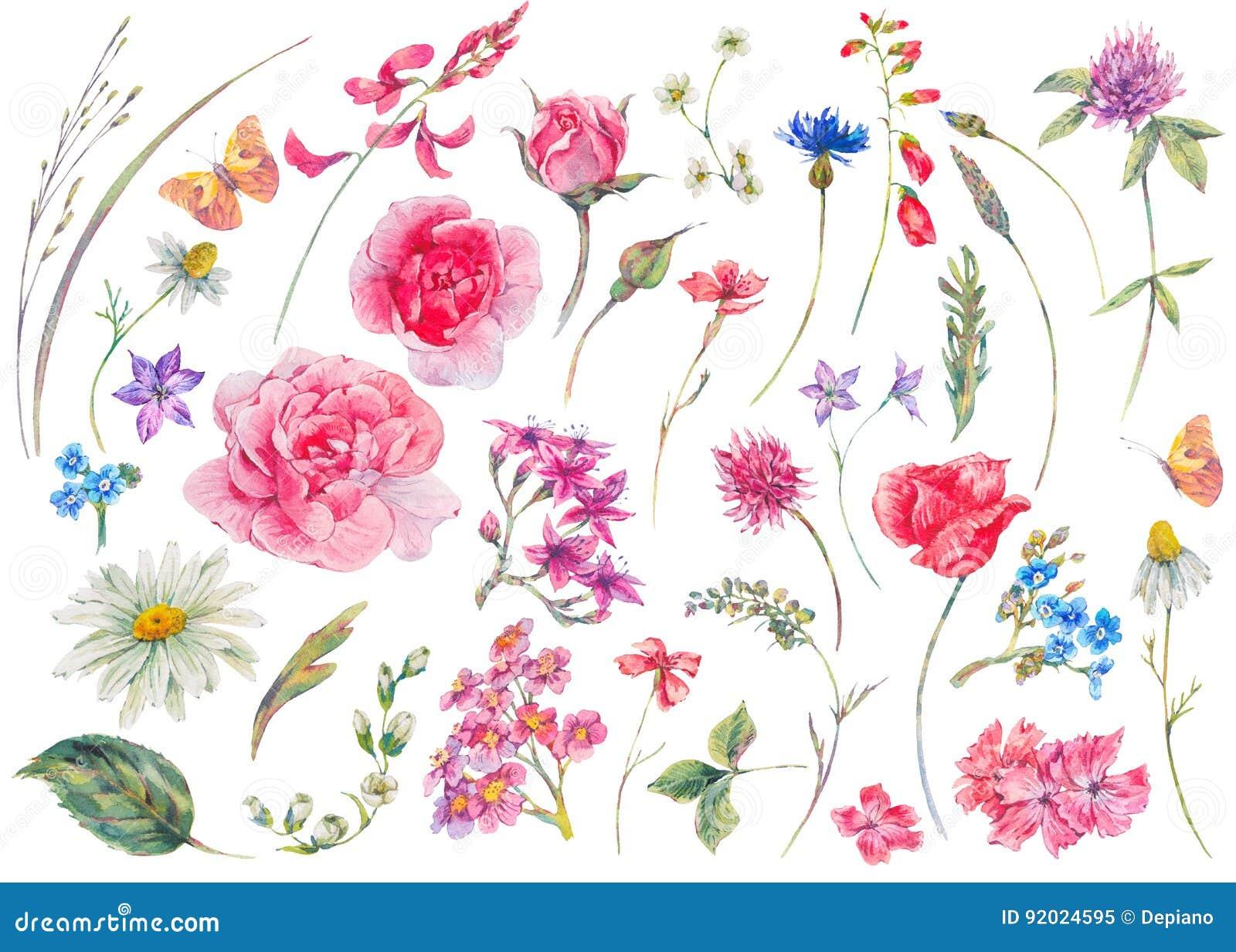 Σύνολο Watercolor εκλεκτής ποιότητας floral θερινών φυσικών στοιχείων