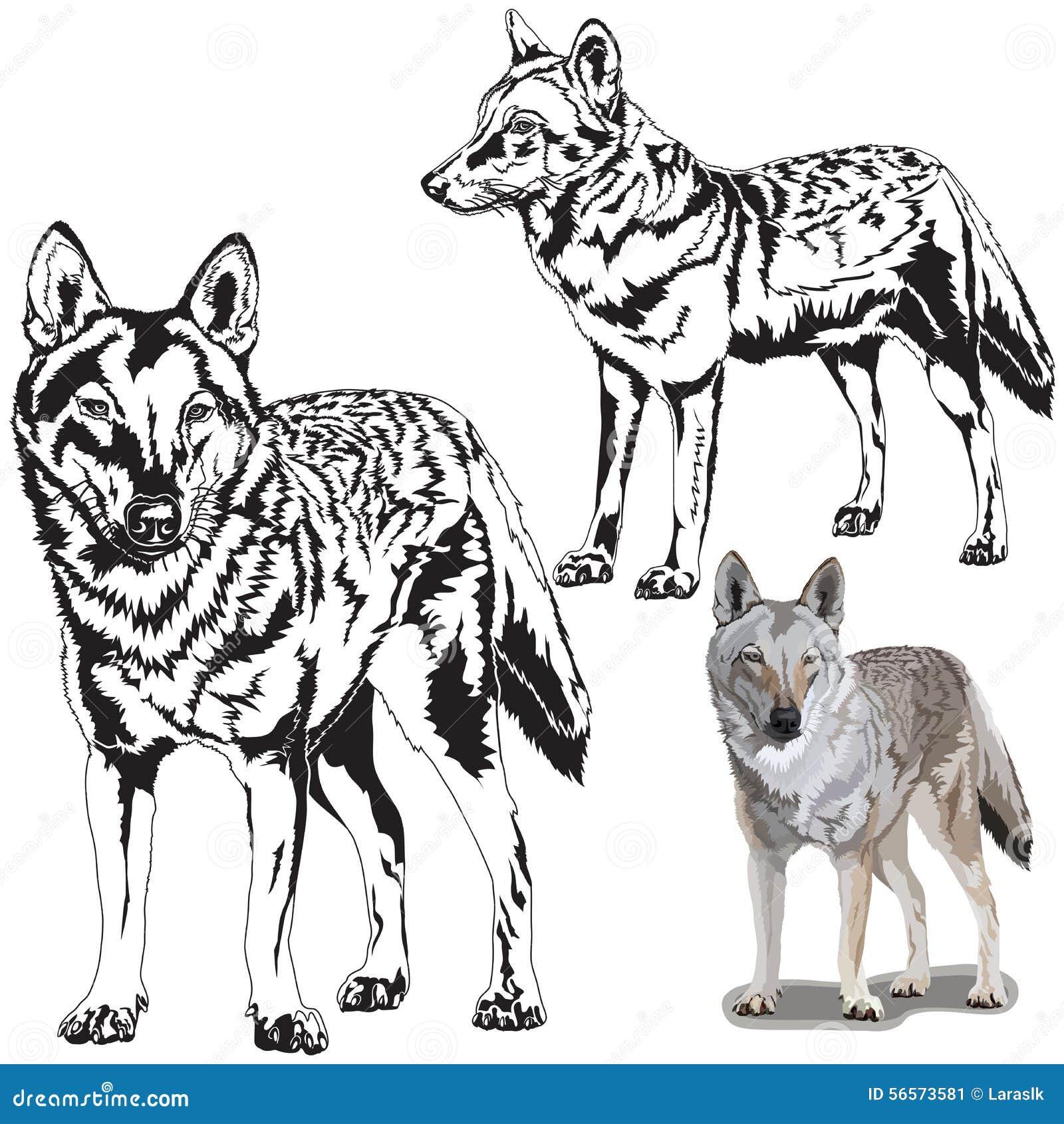 Download Σύνολο Wolfs διανυσματική απεικόνιση. εικονογραφία από φύση - 56573581