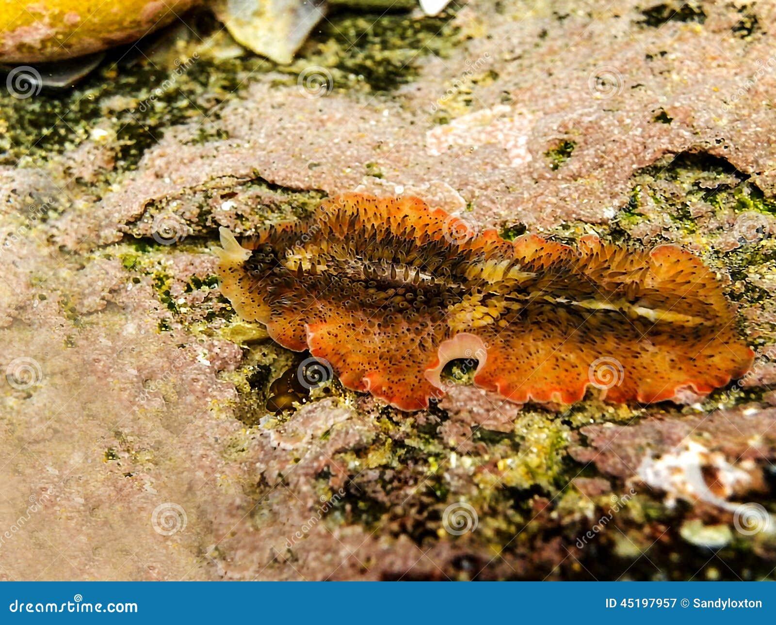 Τάπητας Flatworm 1