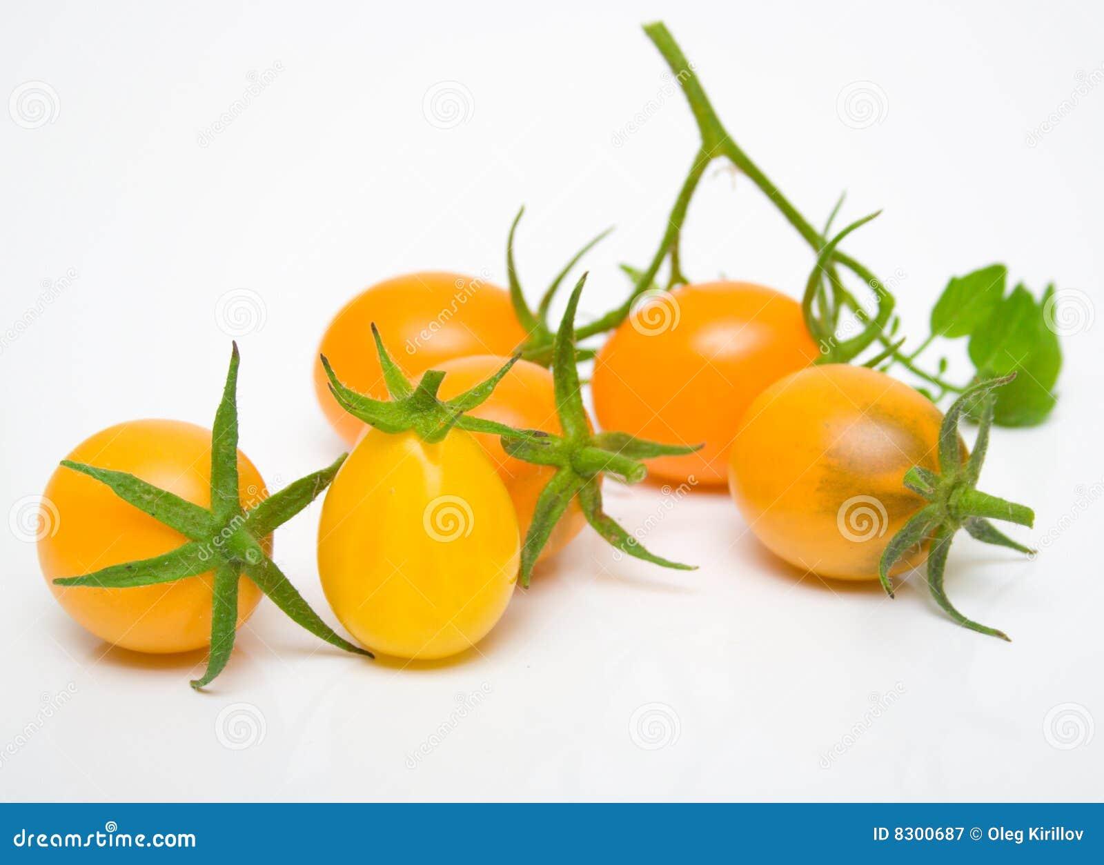 τέλειες ντομάτες κίτρινε