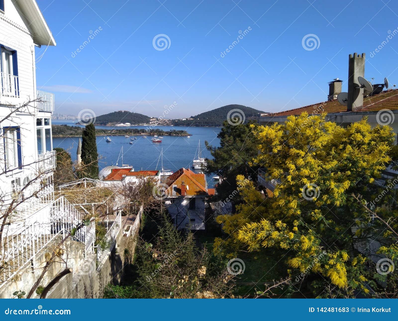 Τέλειος λόφος άποψης διακοπών στη θάλασσα, το νησί και τα ανθίζοντας δέντρα