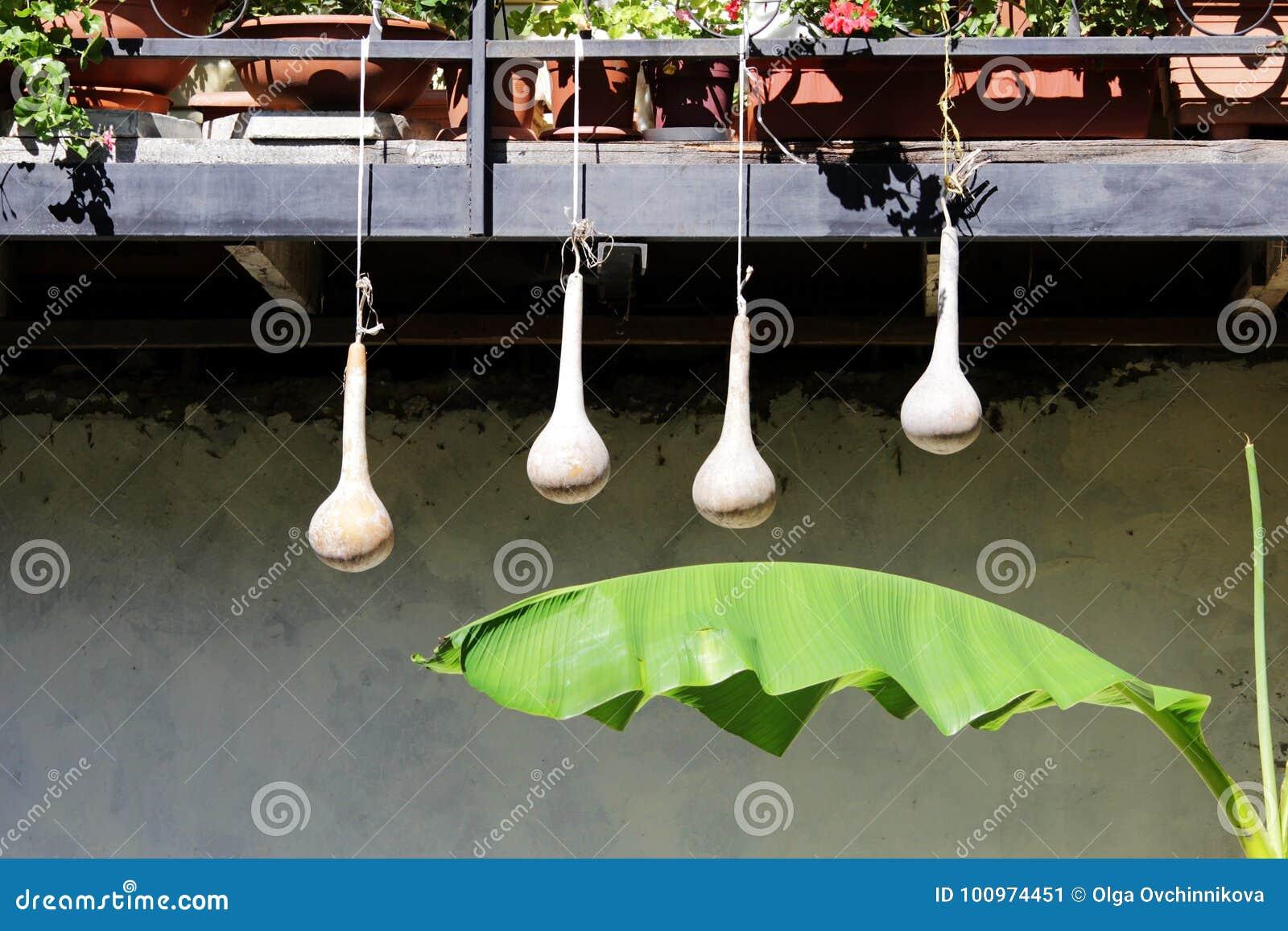 Τέσσερις κολοκύθες κρεμούν το ξηρό μπουκάλι που το των Αντιλλών siceraria Lagenaria κολοκύθας Asiatica κρεμά στην οδό που διακοσμ