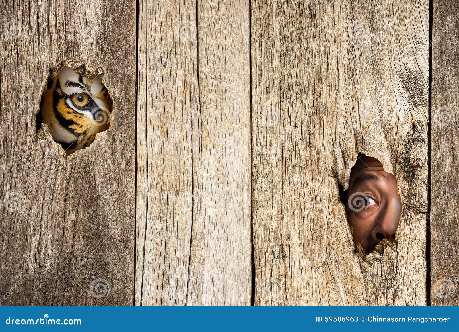Τίγρη και ανθρώπινο μάτι στην ξύλινη τρύπα