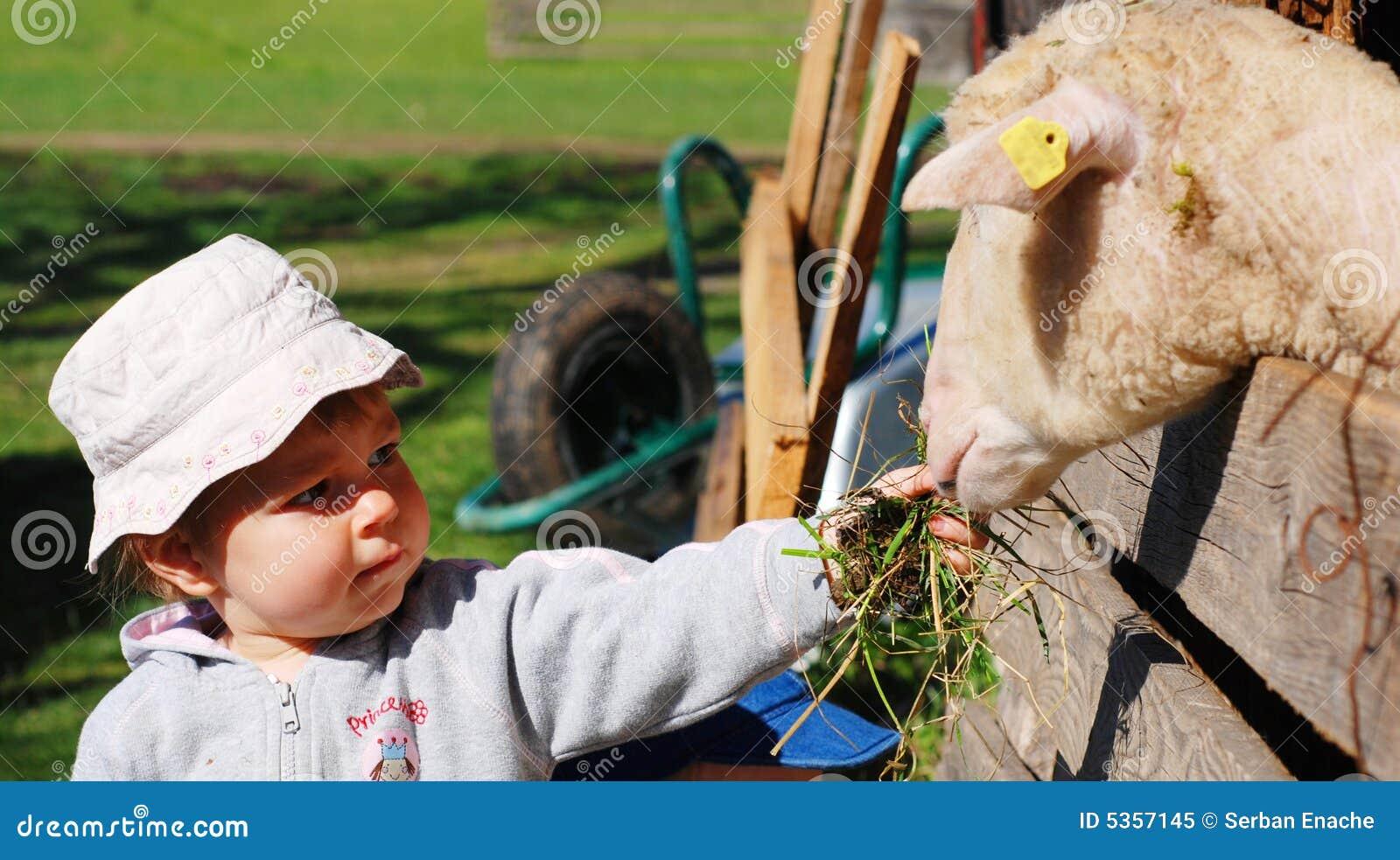 ταΐζοντας πρόβατα κοριτσιών