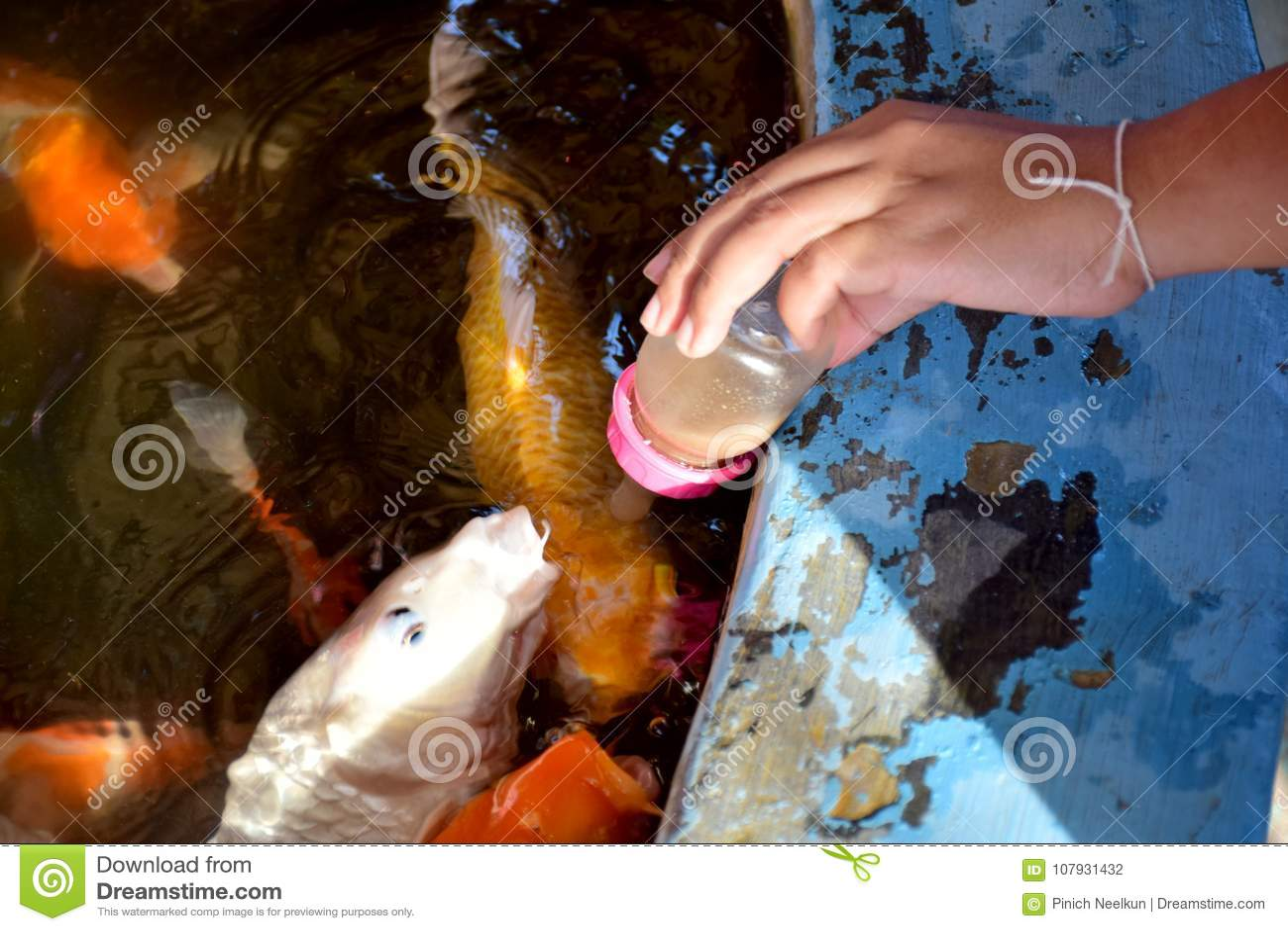 Ταΐστε τα ψάρια στη λίμνη