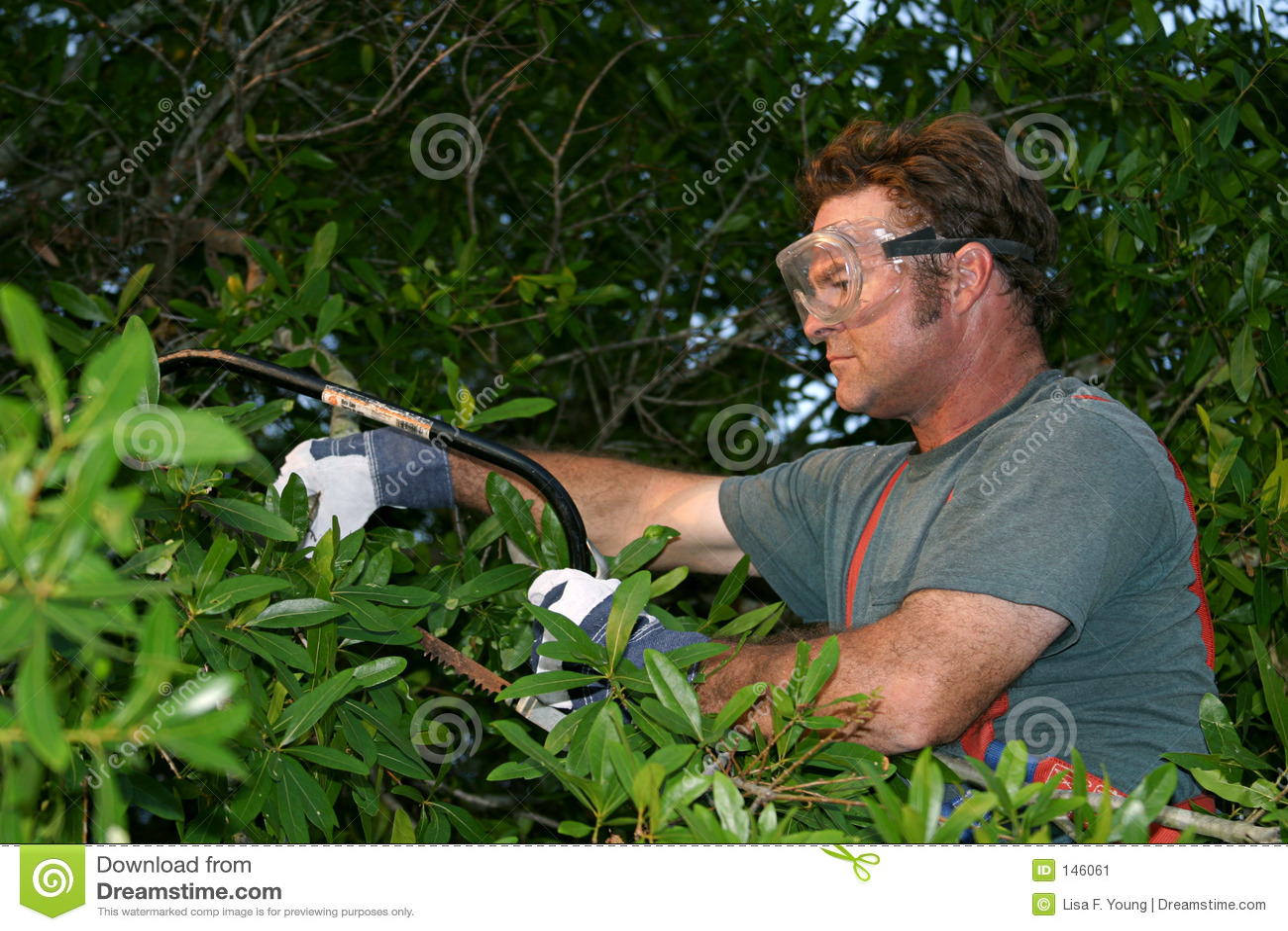 τακτοποίηση δέντρων