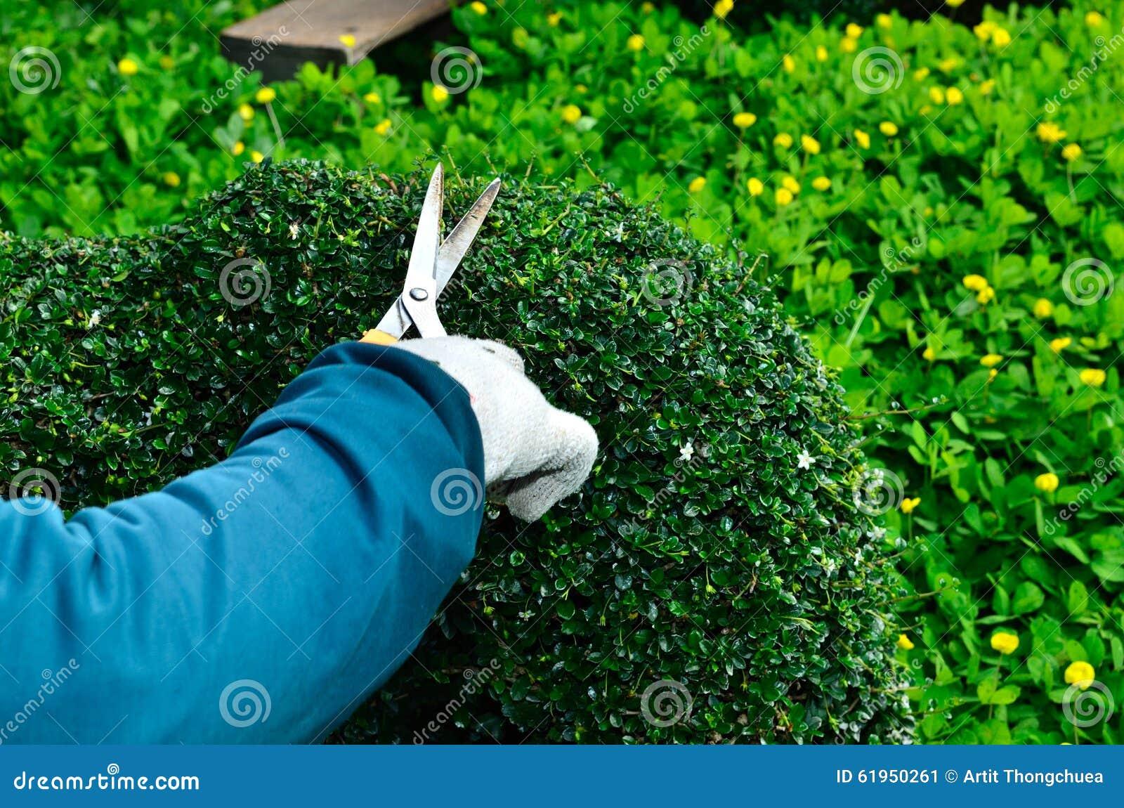 Τακτοποιώντας φράκτης κηπουρών στο δέντρο