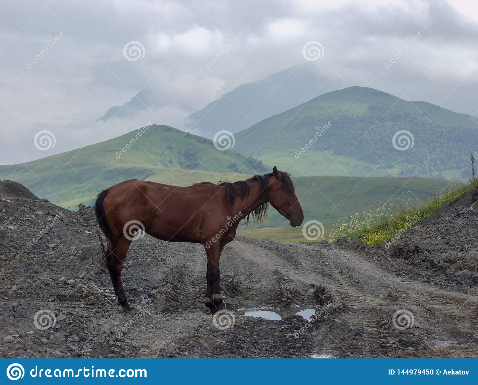 Άλογο Ταξίδι στα βουνά Καύκασου στην Καμπαρντίνο-Μπαλκαρία