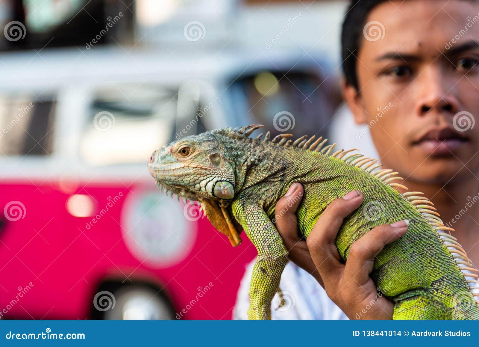 Ταϊλανδική σαύρα iguana εκμετάλλευσης ατόμων