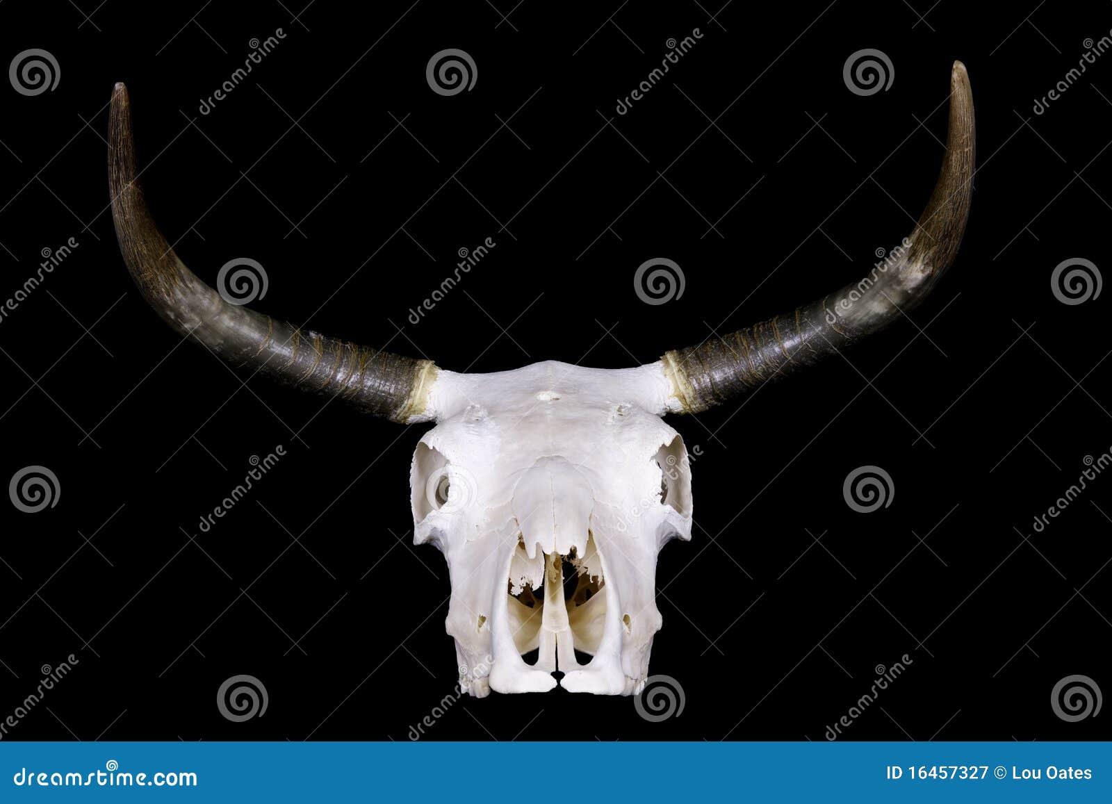 ταύρος κρανίων