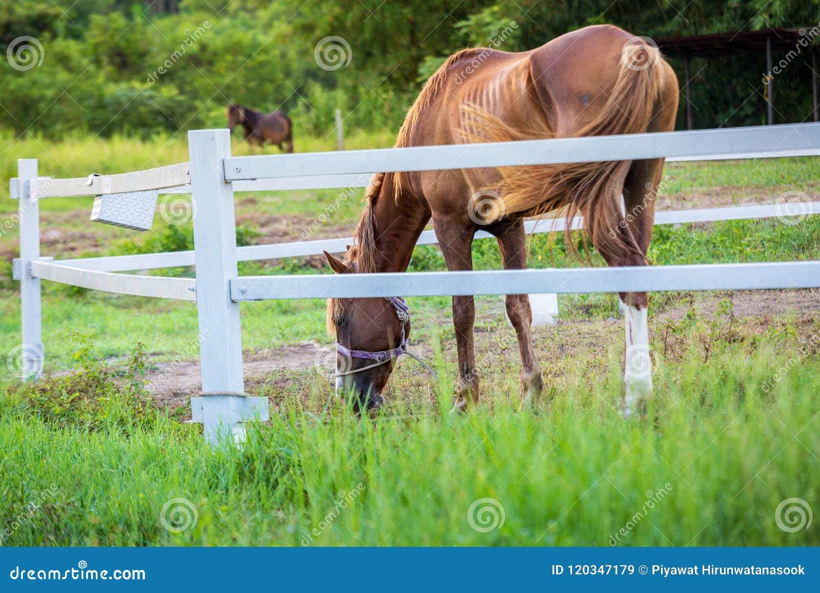 Τα άλογα θαμπάδων στο υπόβαθρο και οι χλόες με το πρωί δροσίζουν στο πρώτο πλάνο, πράσινο λιβάδι για τα άλογα με έναν σταύλο