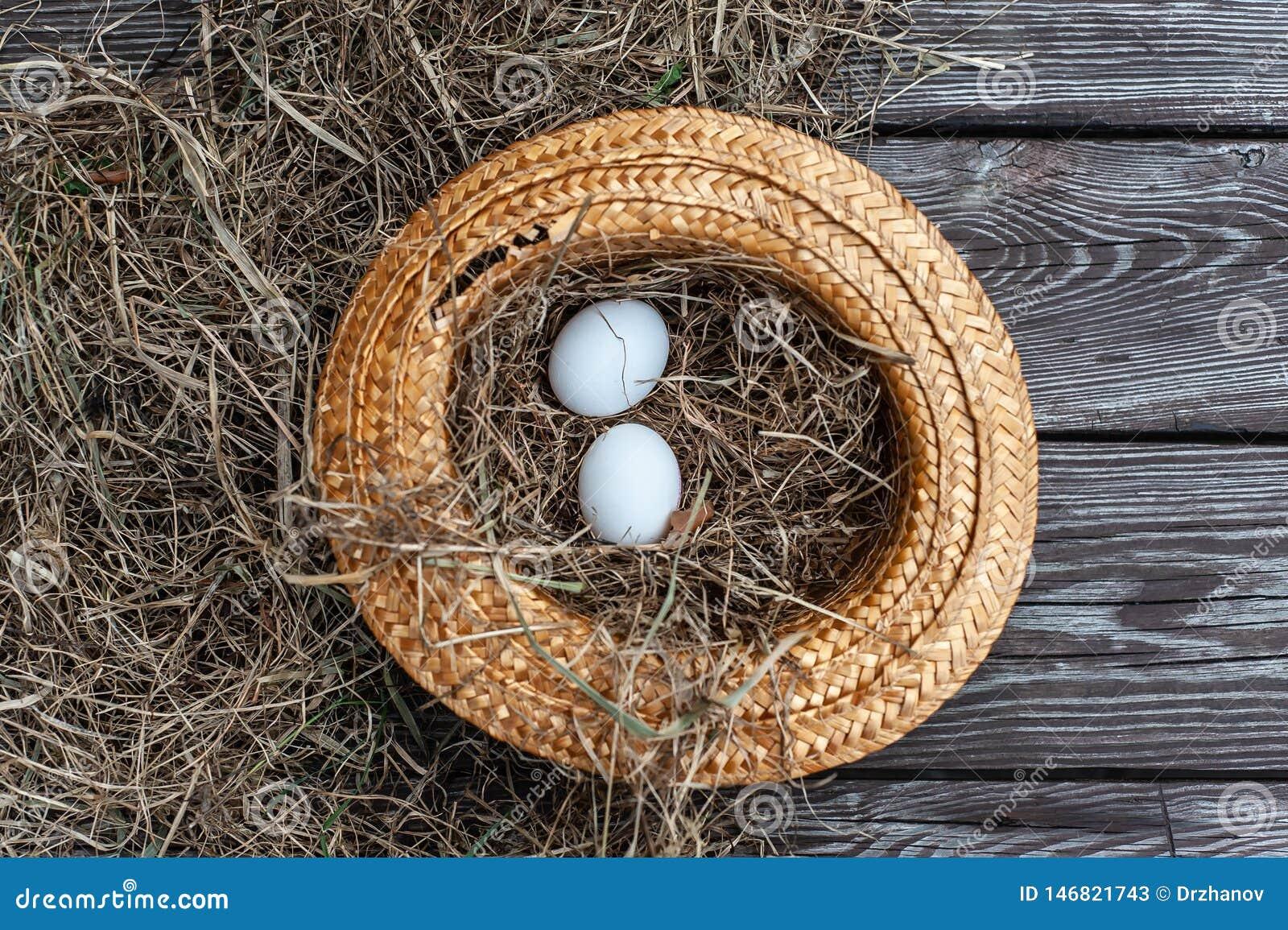 Τα άσπρα αυγά βάζουν στο κίτρινο καπέλο αχύρου ως φωλιά με τον ξηρό σανό μέσα στον ξύλινο ηλικίας πίνακα