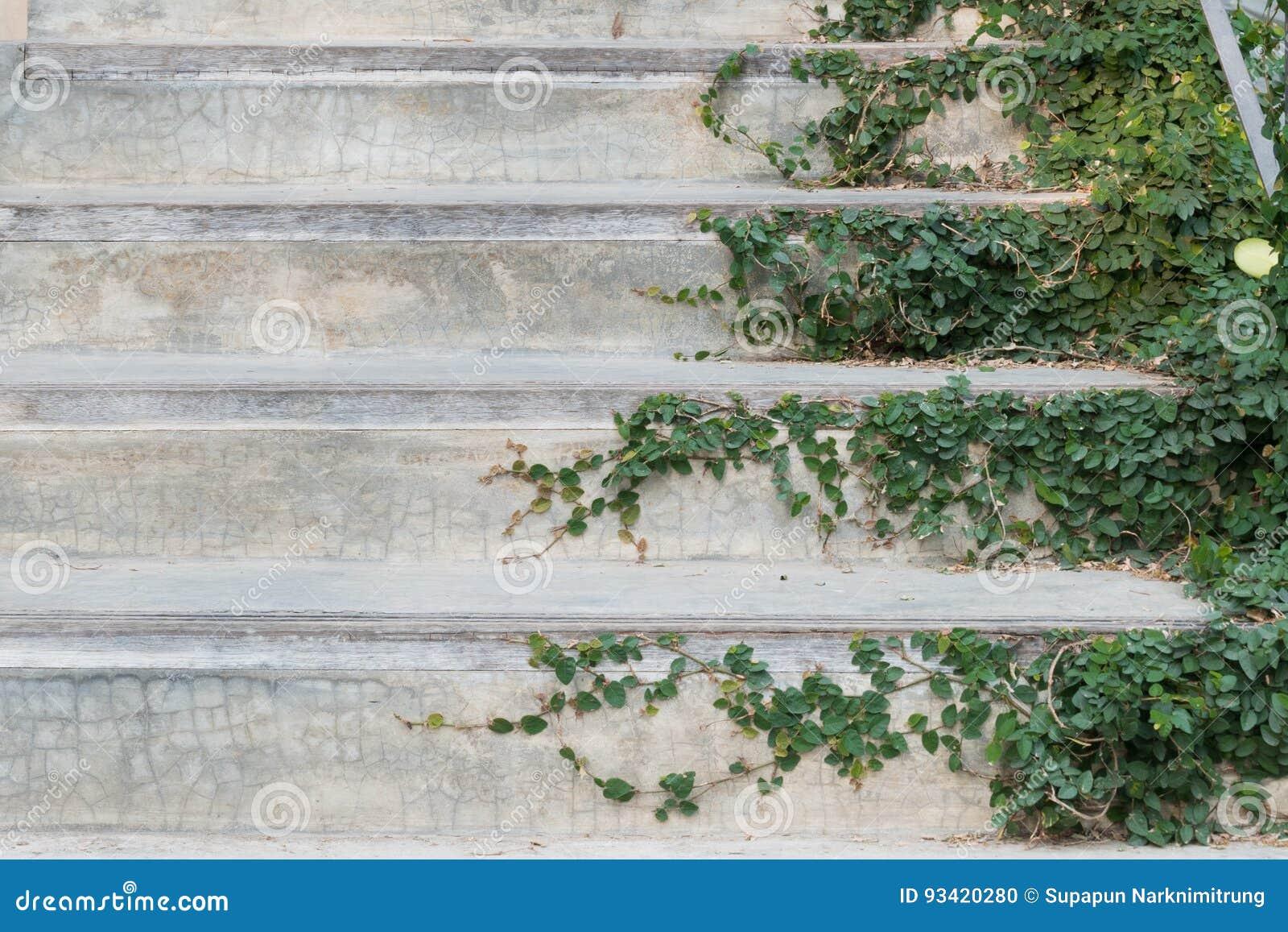 Τα άσπρα σκαλοπάτια τσιμέντου κάλυψαν το πράσινο φυτό κισσών φύλλων ιδέα σχεδίου εγχώριων διακοσμήσεων σπιτιών πρασινάδων