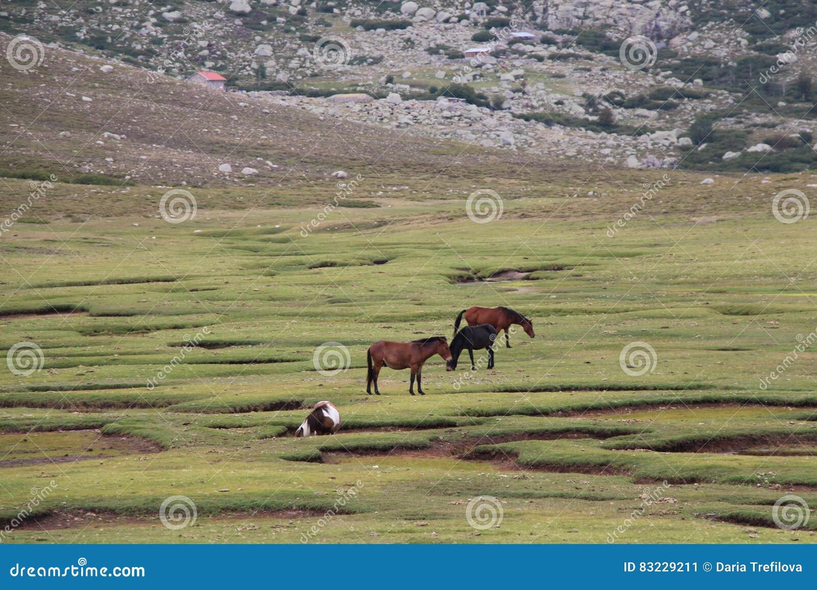Τα άλογα βόσκουν σε έναν τομέα