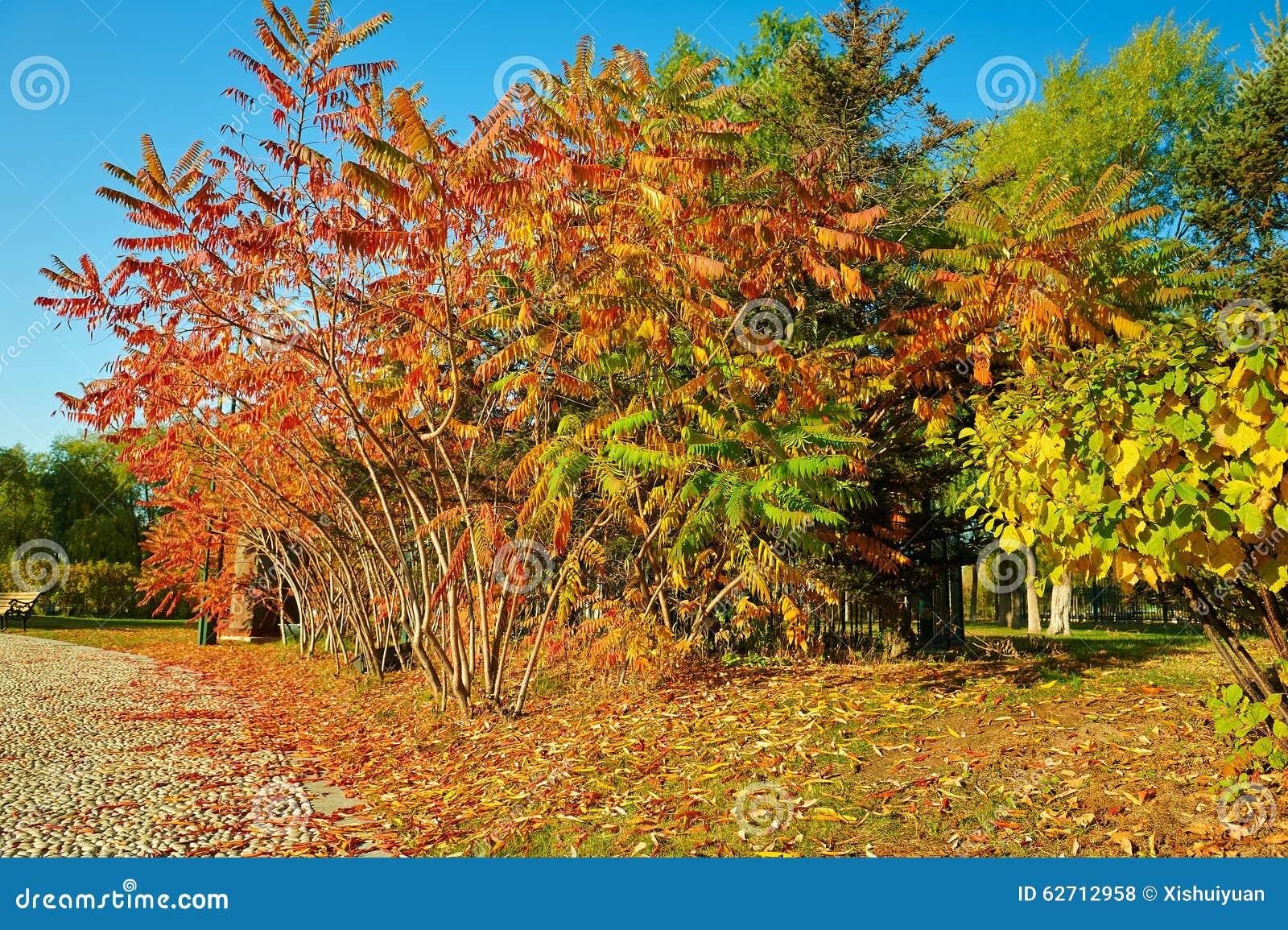 Τα δέντρα φανών