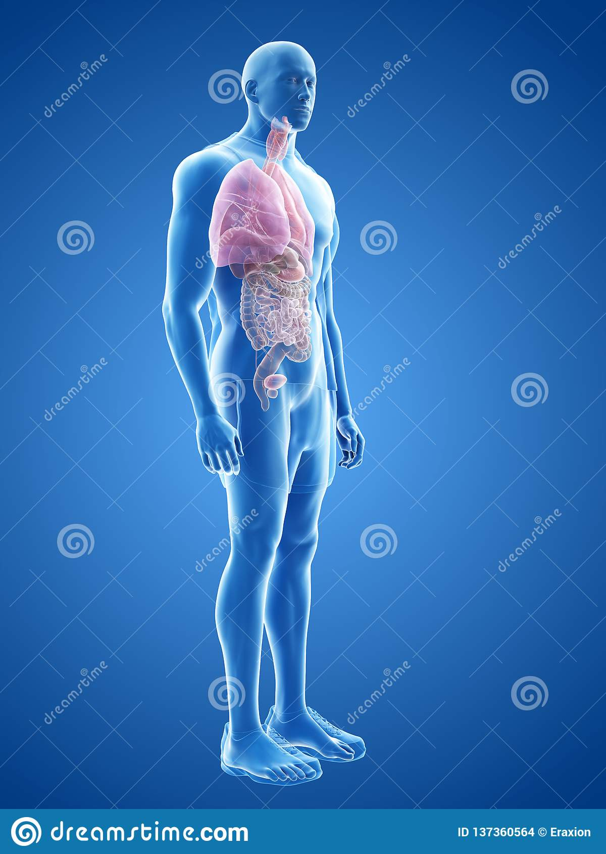Τα ανθρώπινα όργανα