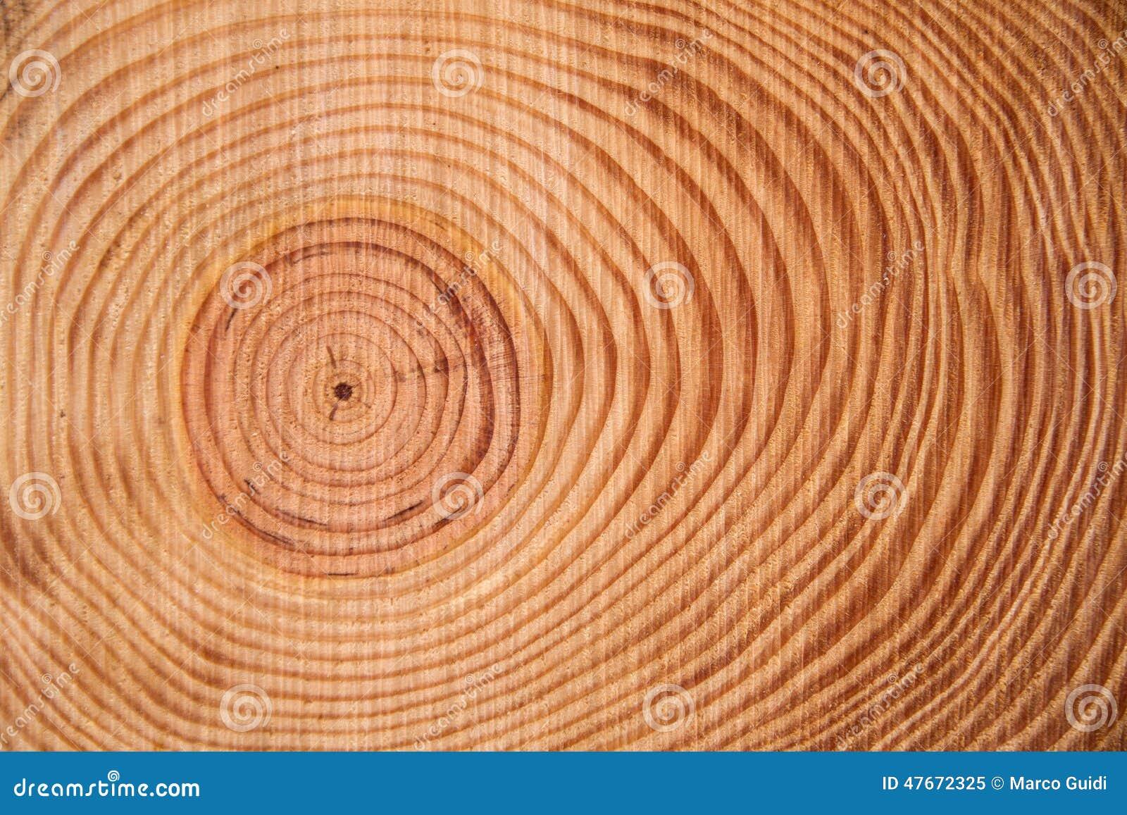 Τα δαχτυλίδια του δέντρου πεύκων