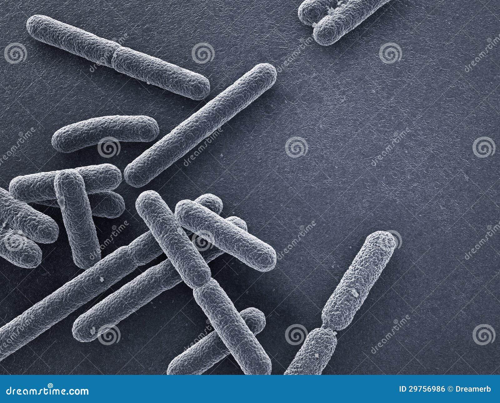 Τα βακτηρίδια κλείνουν επάνω