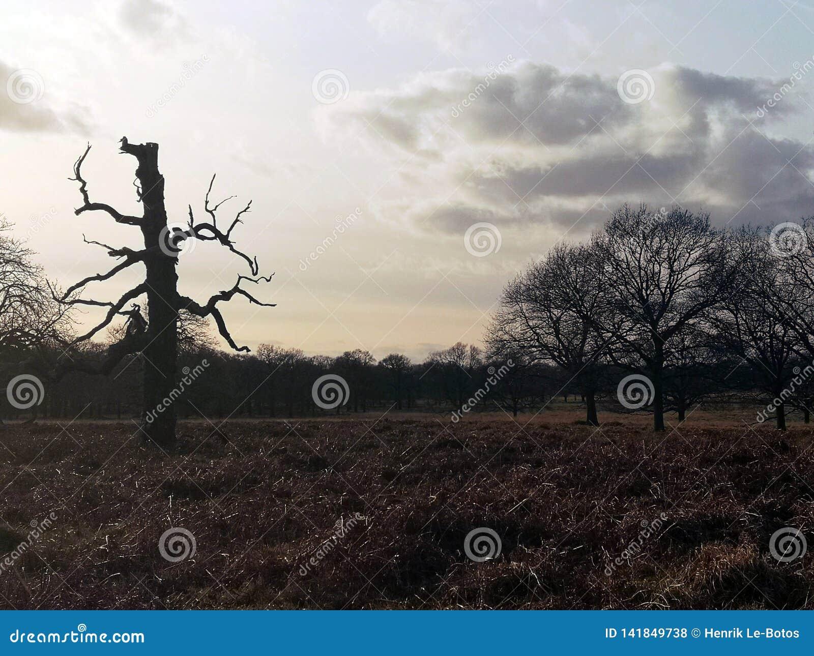 Πάρκο του Ρίτσμοντ, Λονδίνο, Ηνωμένο Βασίλειο