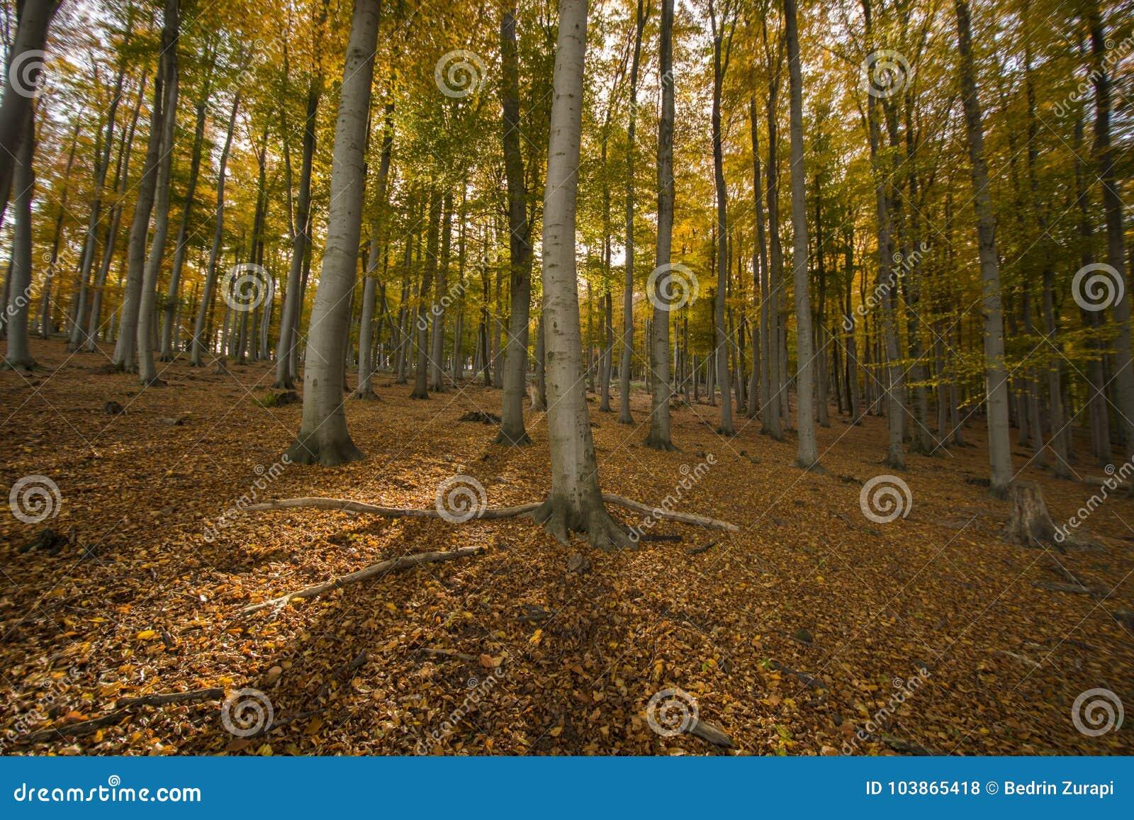 τα δασικά ξύλα flovers αγάπης χορταριών φθινοπώρου δέντρων ηλιοφάνειας φωτός του ήλιου φύσης βγάζουν φύλλα το γήινο τοπίο