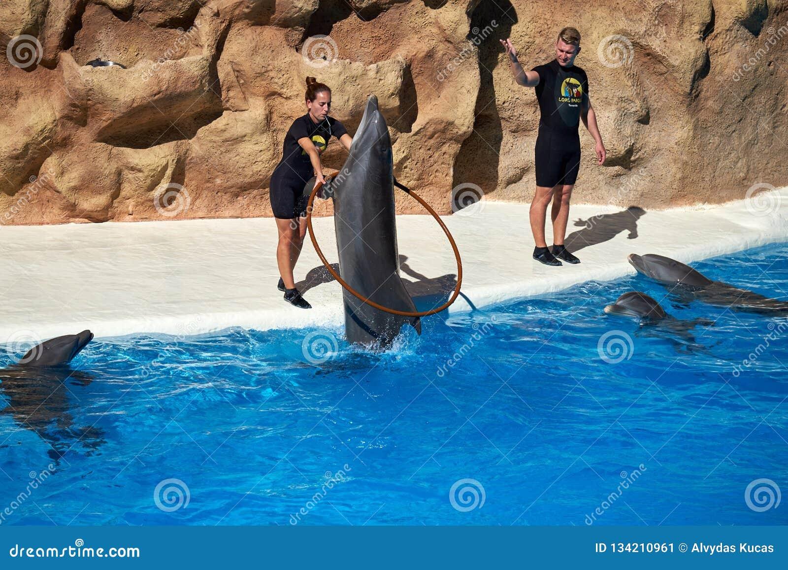 Τα δελφίνια παρουσιάζουν στο πάρκο Loro Loro Parque Ισπανία