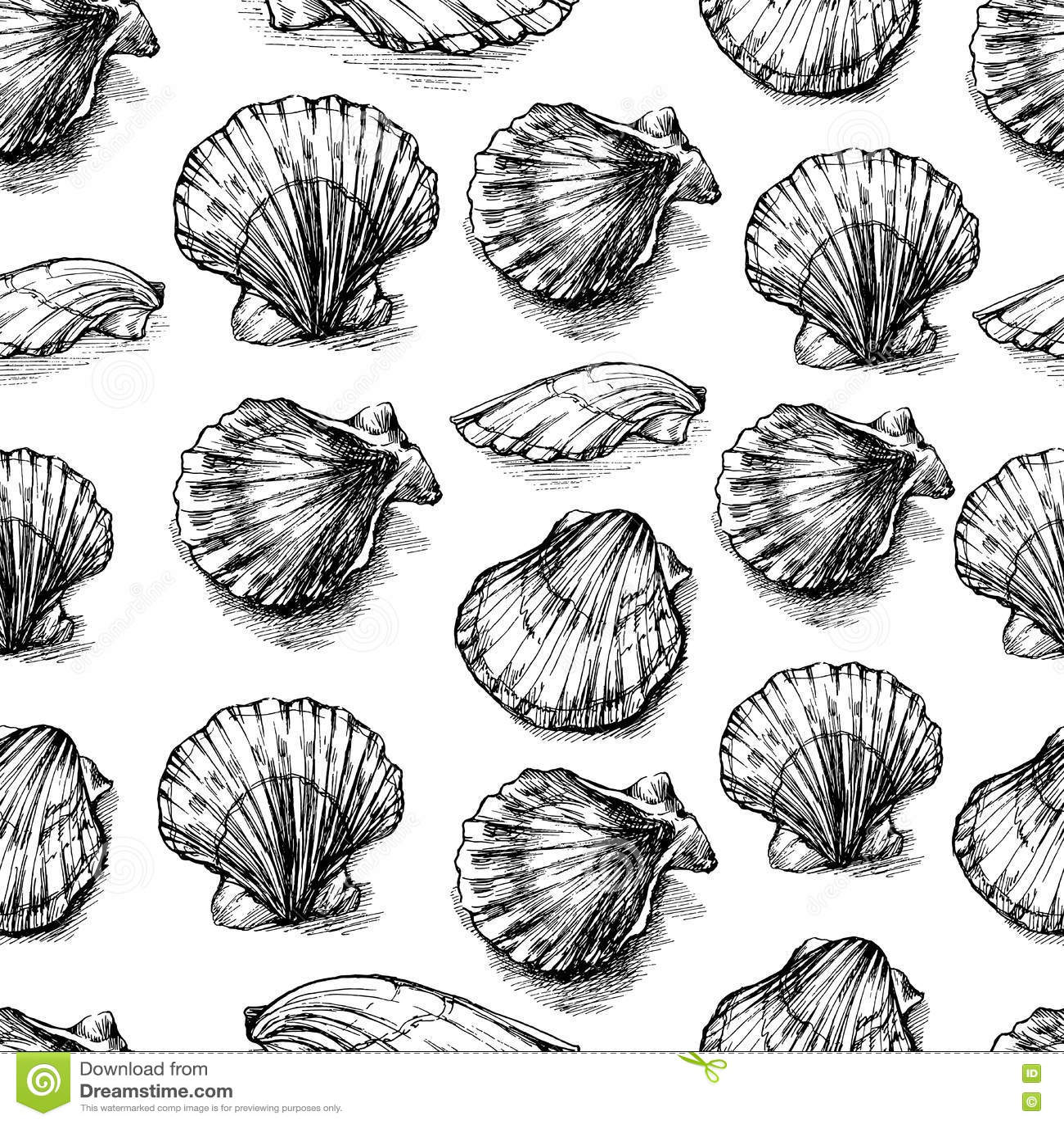 Τα θαλασσινά κοχύλια δίνουν το συρμένο διανυσματικό γραφικό σκίτσο χαρακτικής που απομονώνεται στο άσπρο υπόβαθρο, άνευ ραφής σχέ