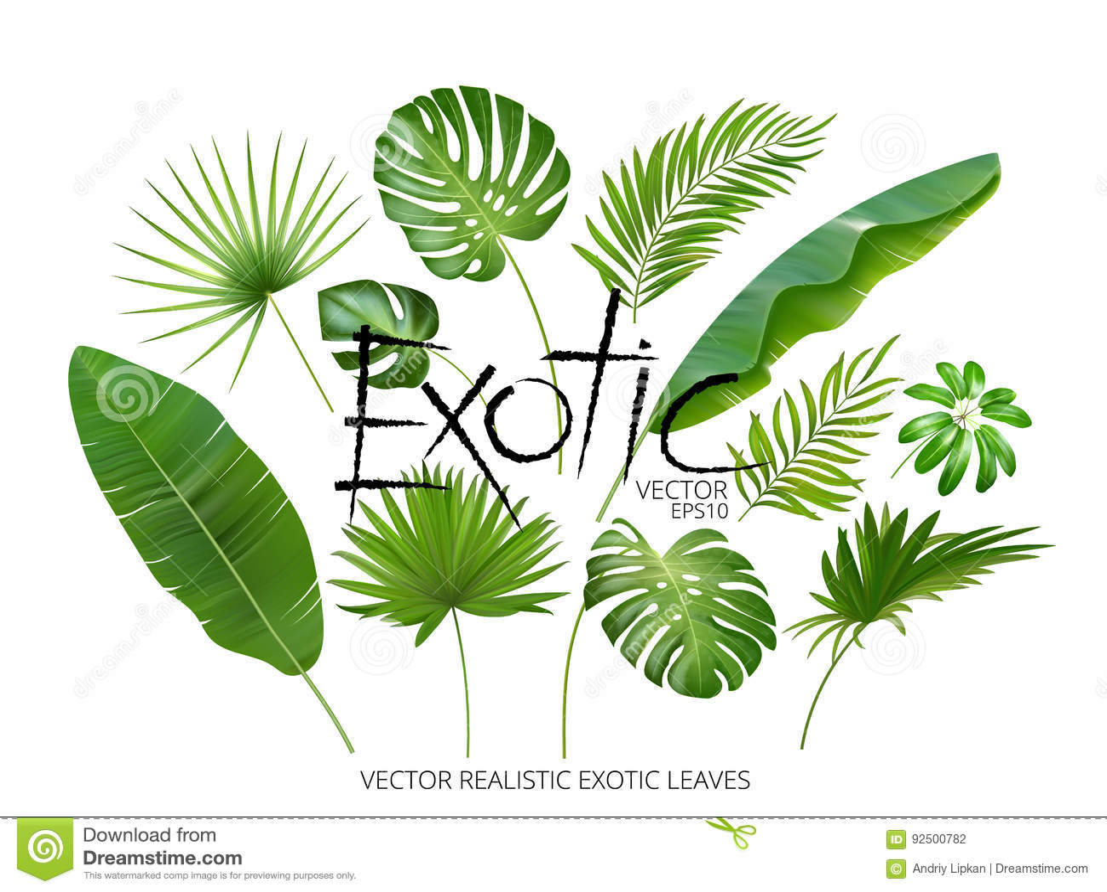 Τα διανυσματικά τροπικά εξωτικά φύλλα, ρεαλιστικά φύλλα ζουγκλών θέτουν απομονωμένος στο άσπρο υπόβαθρο Συλλογή φύλλων φοινικών π