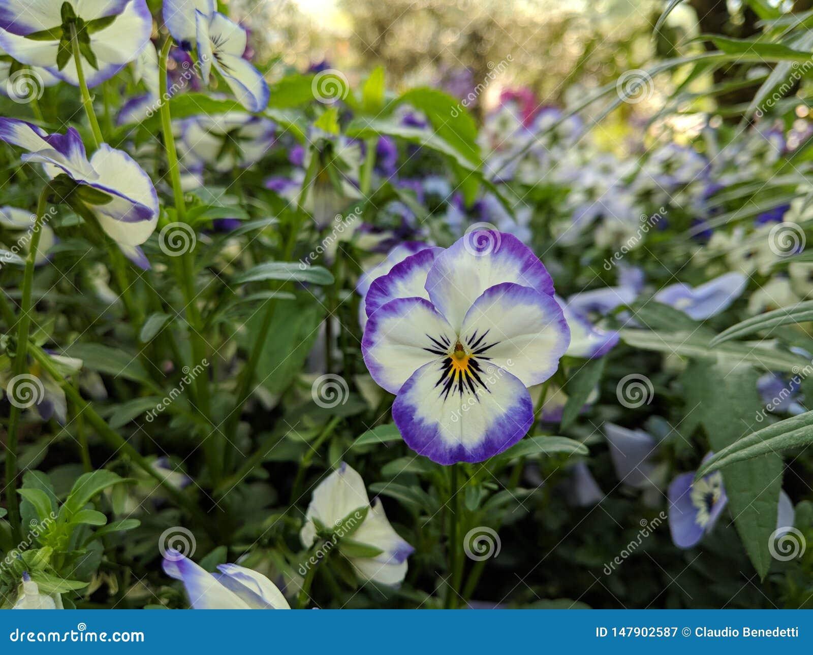 Τα λουλούδια στον κήπο