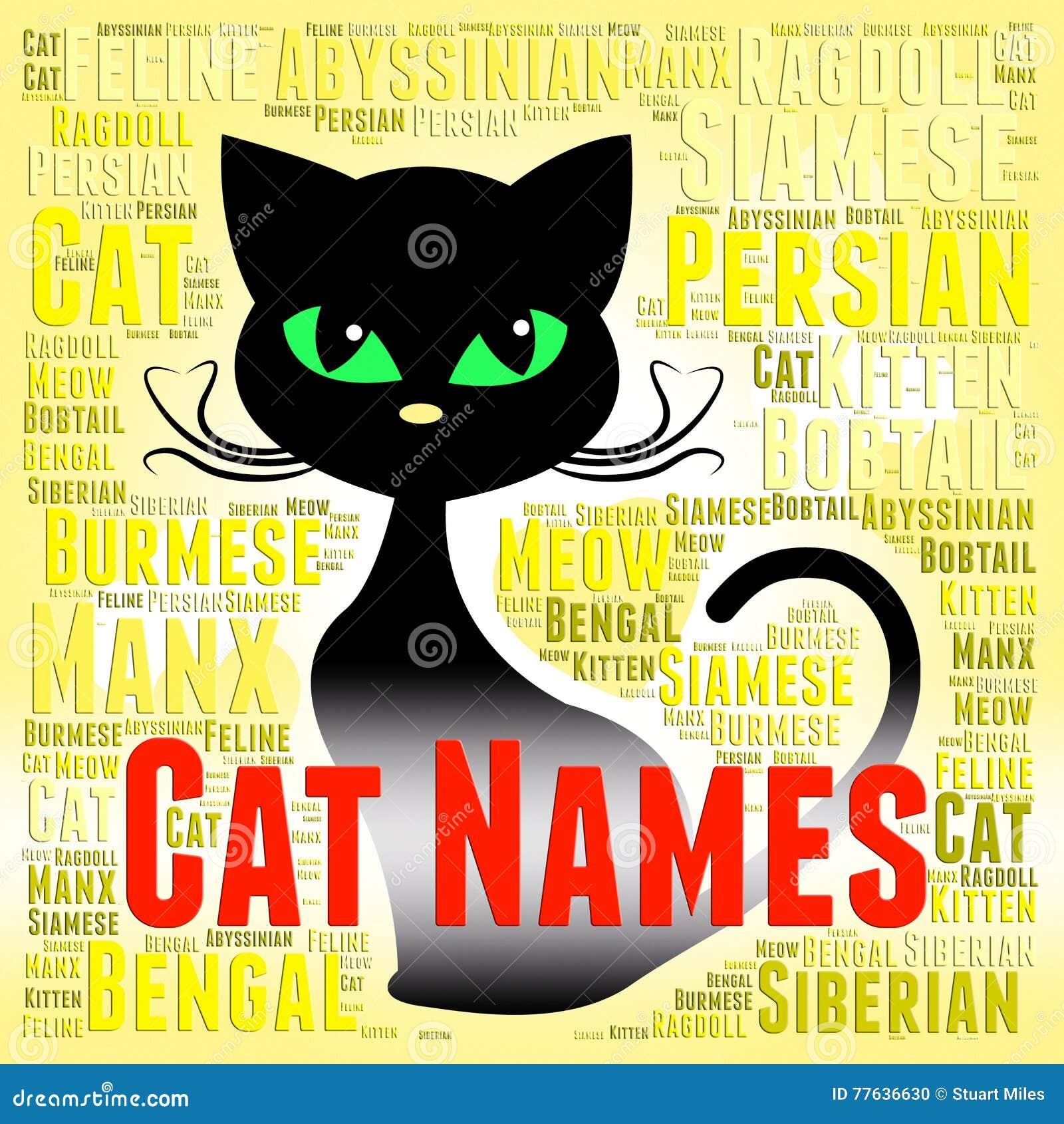 29aead1b89cc Τα ονόματα γατών αντιπροσωπεύουν τα γενεαλογικά κατοικίδια ζώα και ...