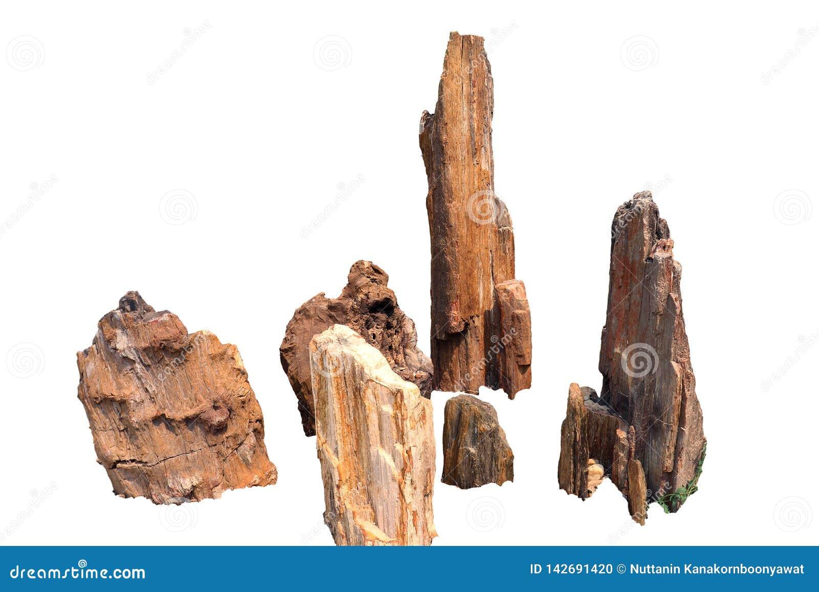 Τα πέτρινα δέντρα, πετρώνω δάσος, πέτρωσαν το ξύλο, που απομονώθηκε στο