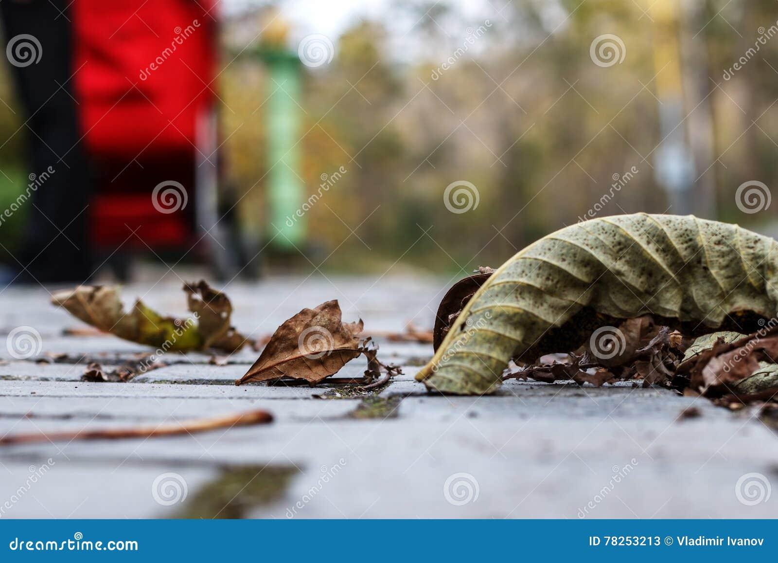 Τα πέφτω-κάτω φύλλα φθινοπώρου