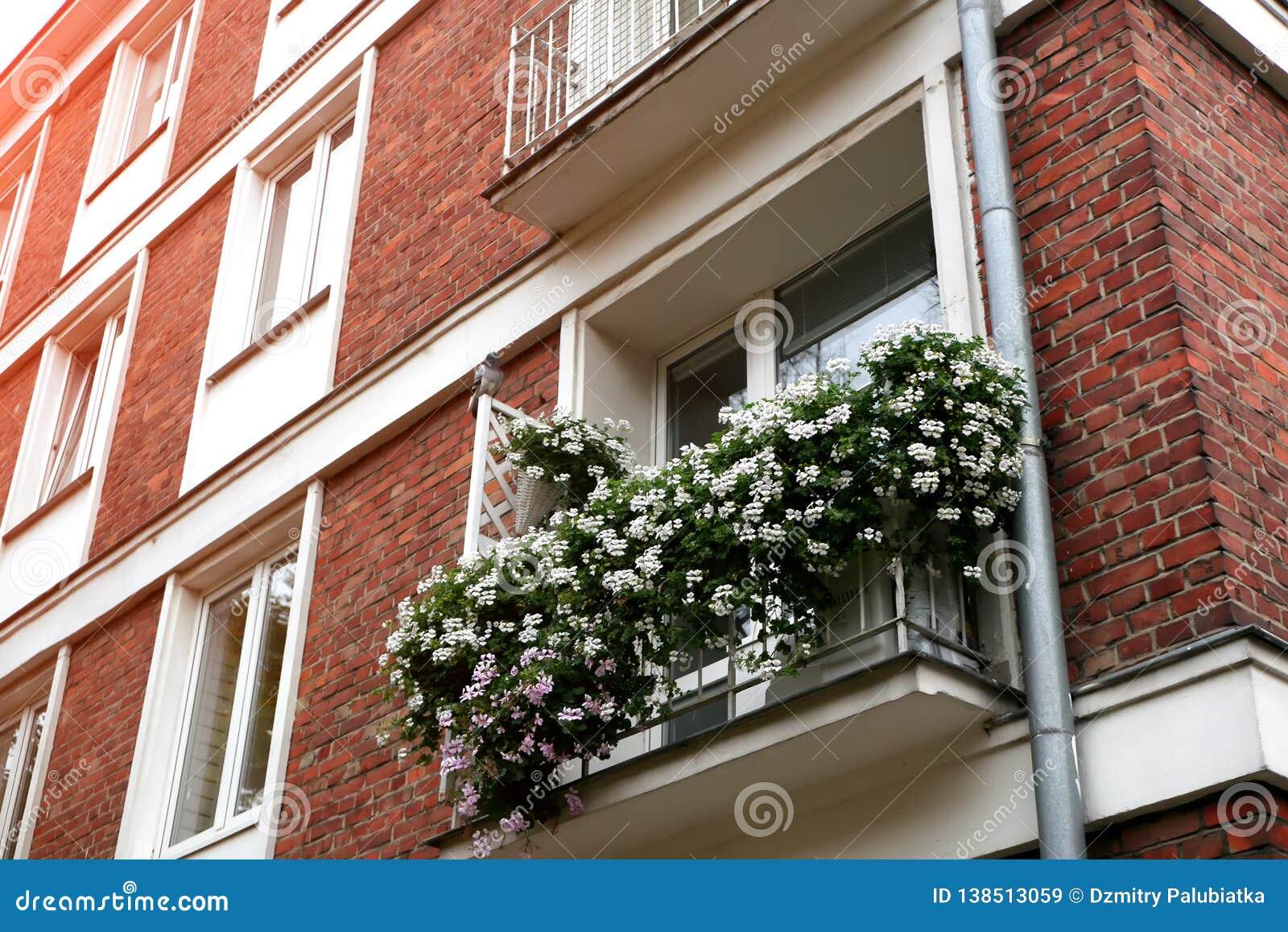 Τα παράθυρα της παλαιάς πόλης είναι διακοσμημένα με τα λουλούδια