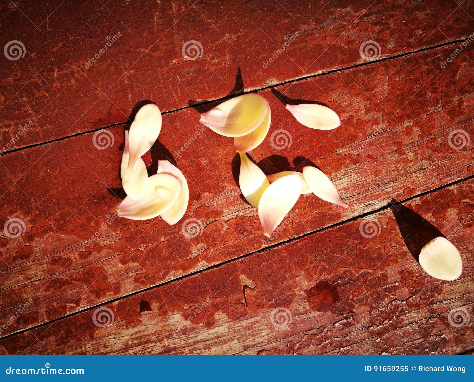 Τα πεντάλια magnolia που βρίσκονται στον ξύλινο πίνακα