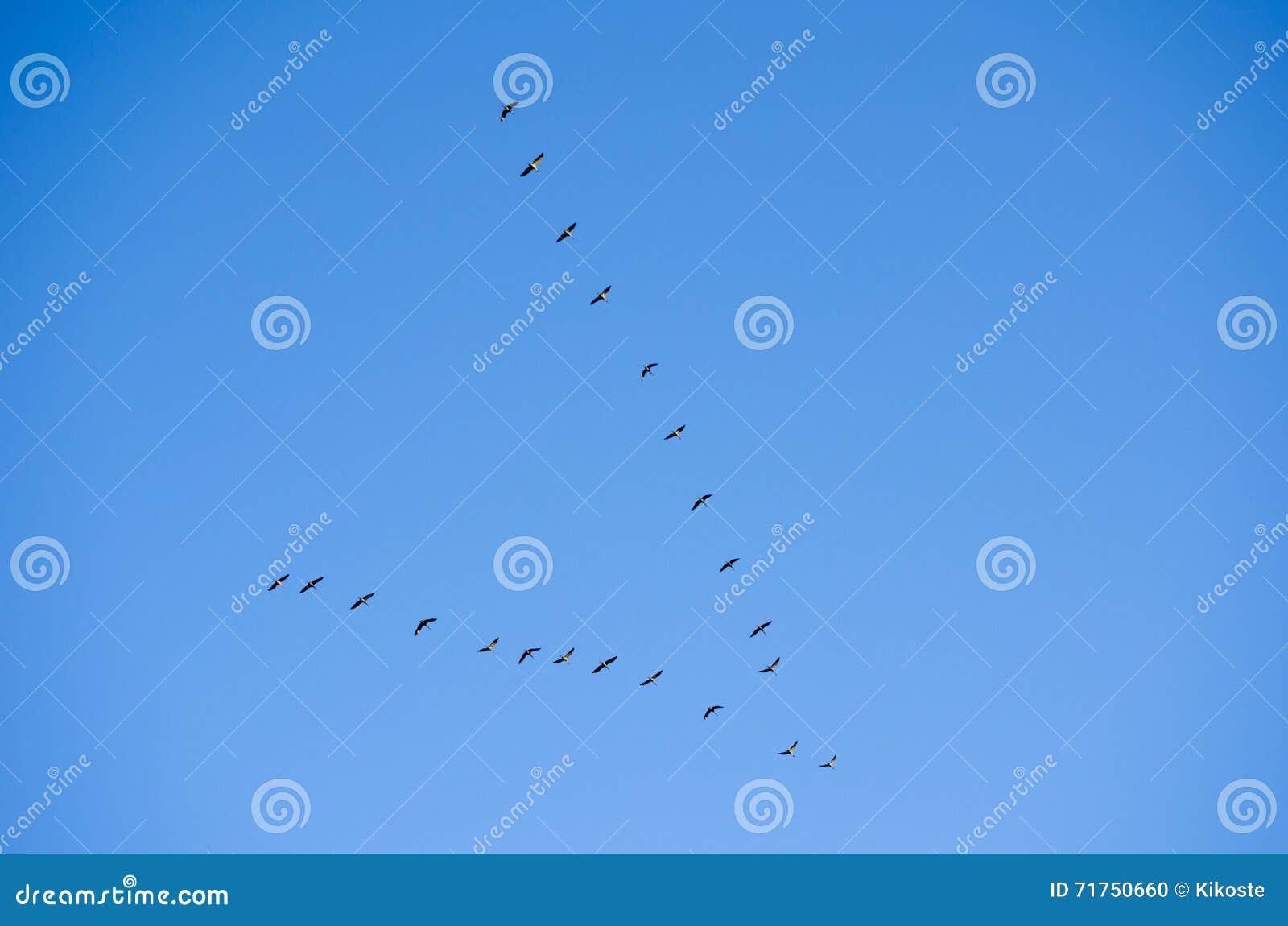 Τα πουλιά πετούν το συμβολικό κλειδί