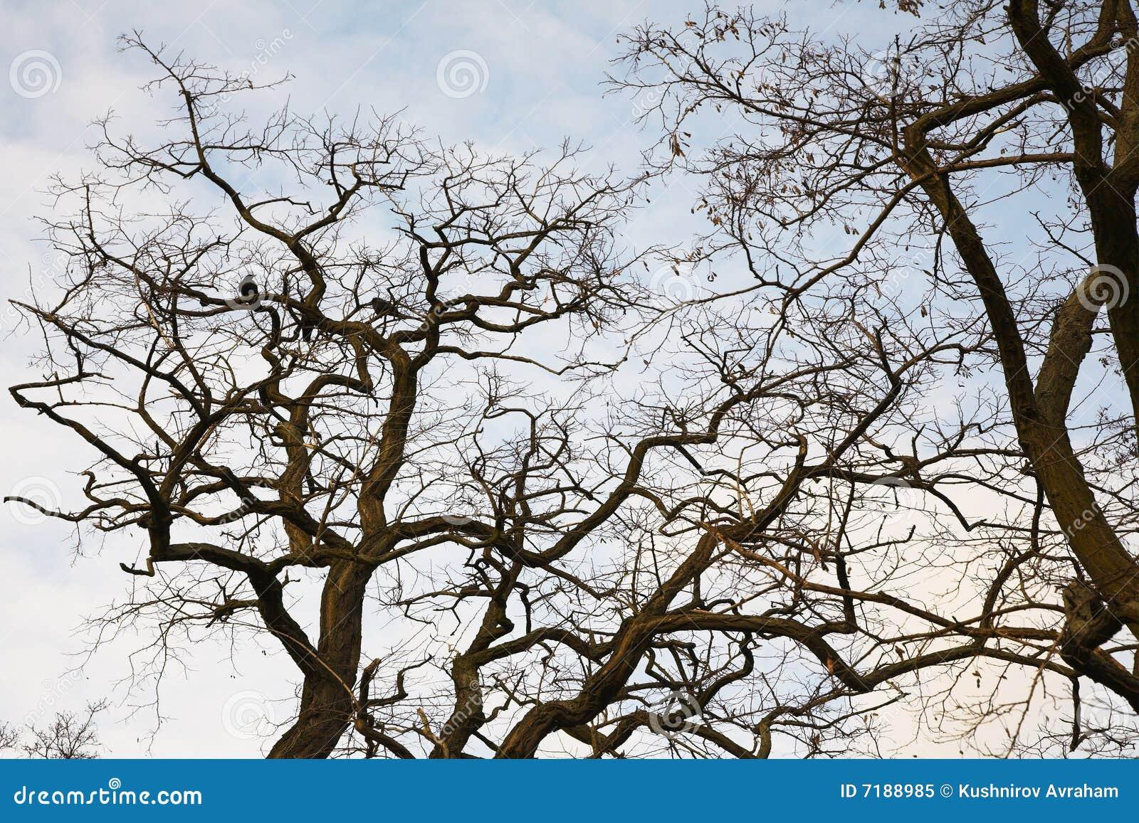 τα προσεγγισμένα πουλιά έχουν πρώτα την άνοιξη